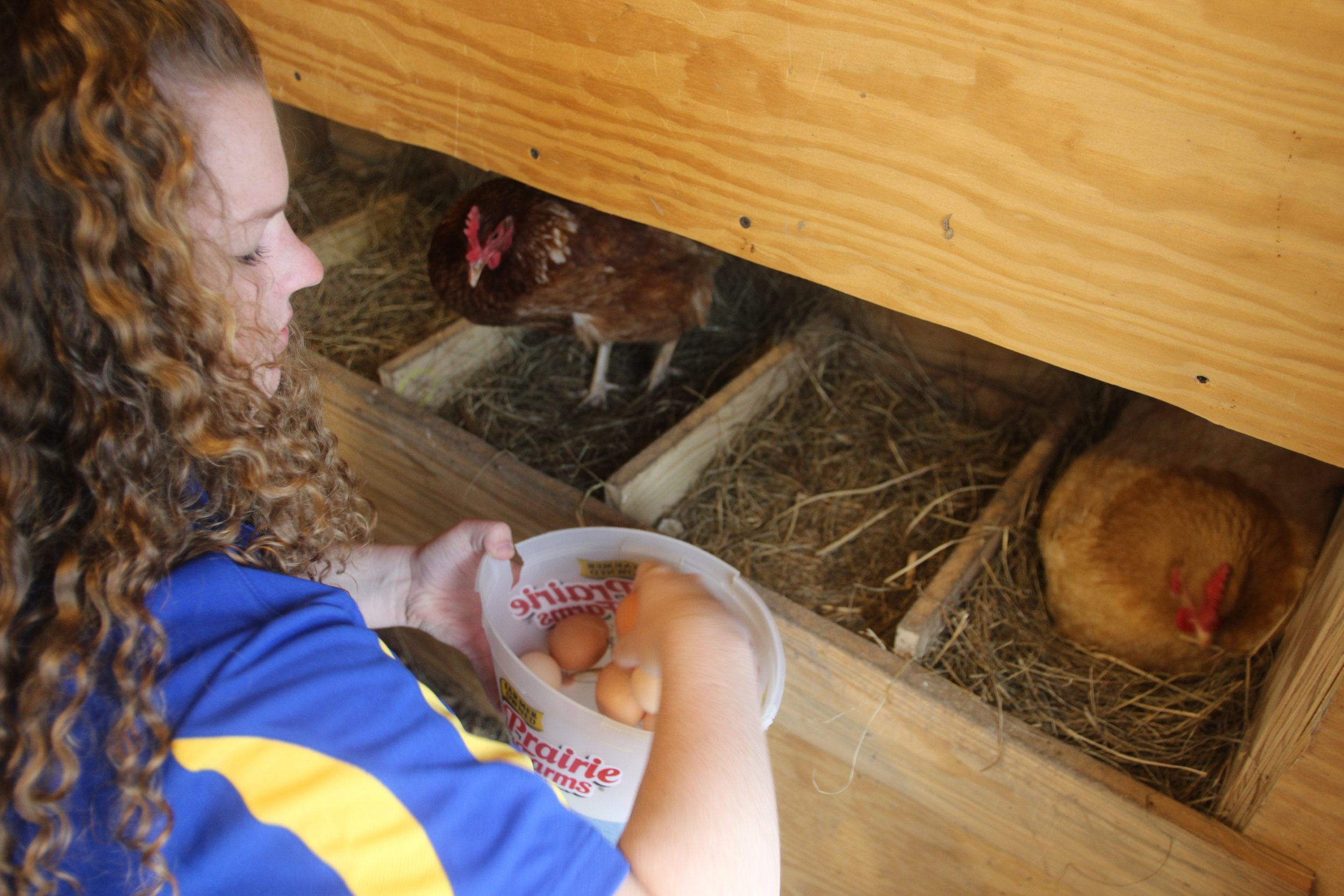 "Sarah Taylor, 12th grade, said about their service project, ""We know we're doing something good."" Chickens need a secure coop, including one laying box per every two or three hens."