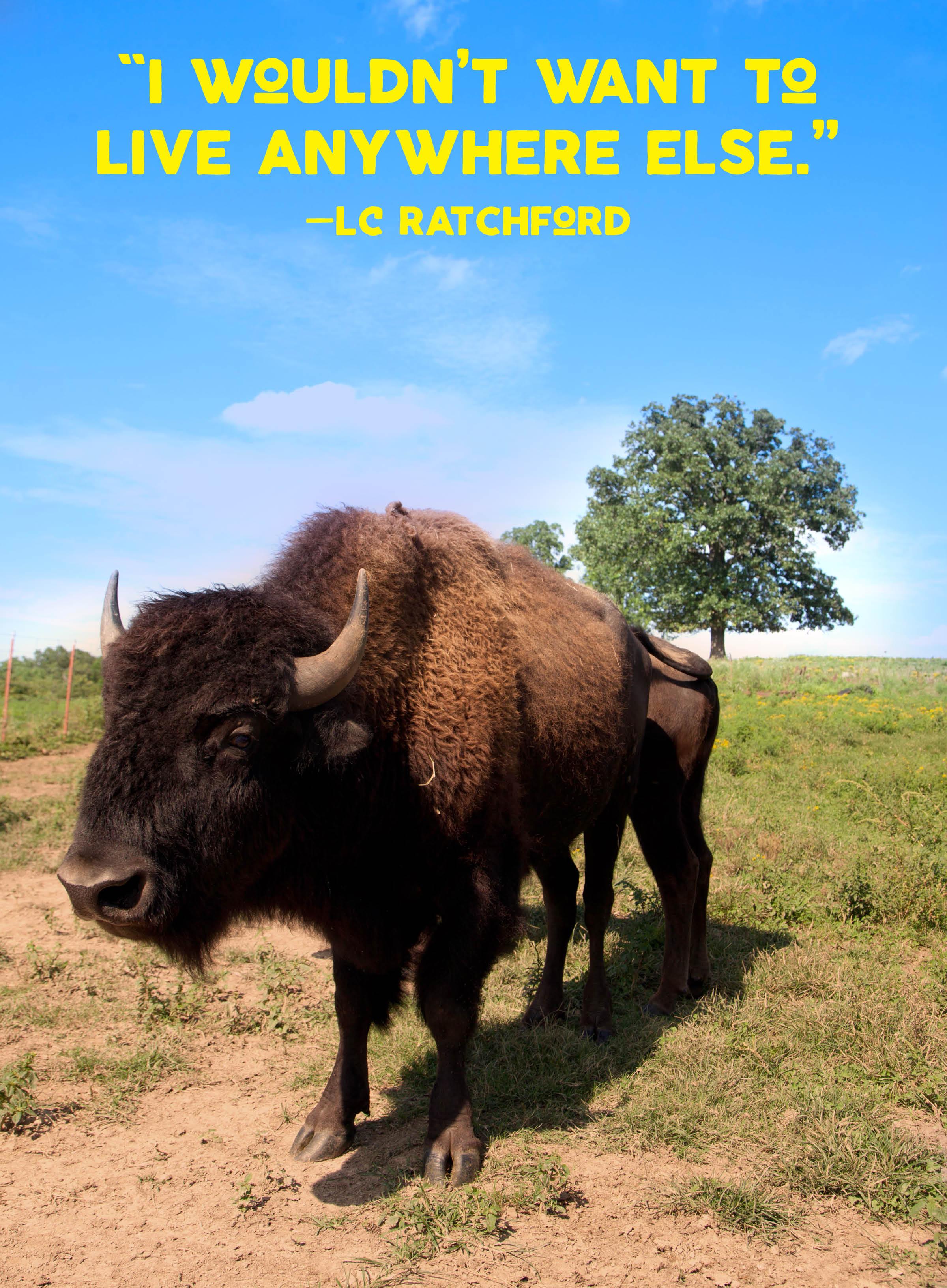 Herd 28.jpg