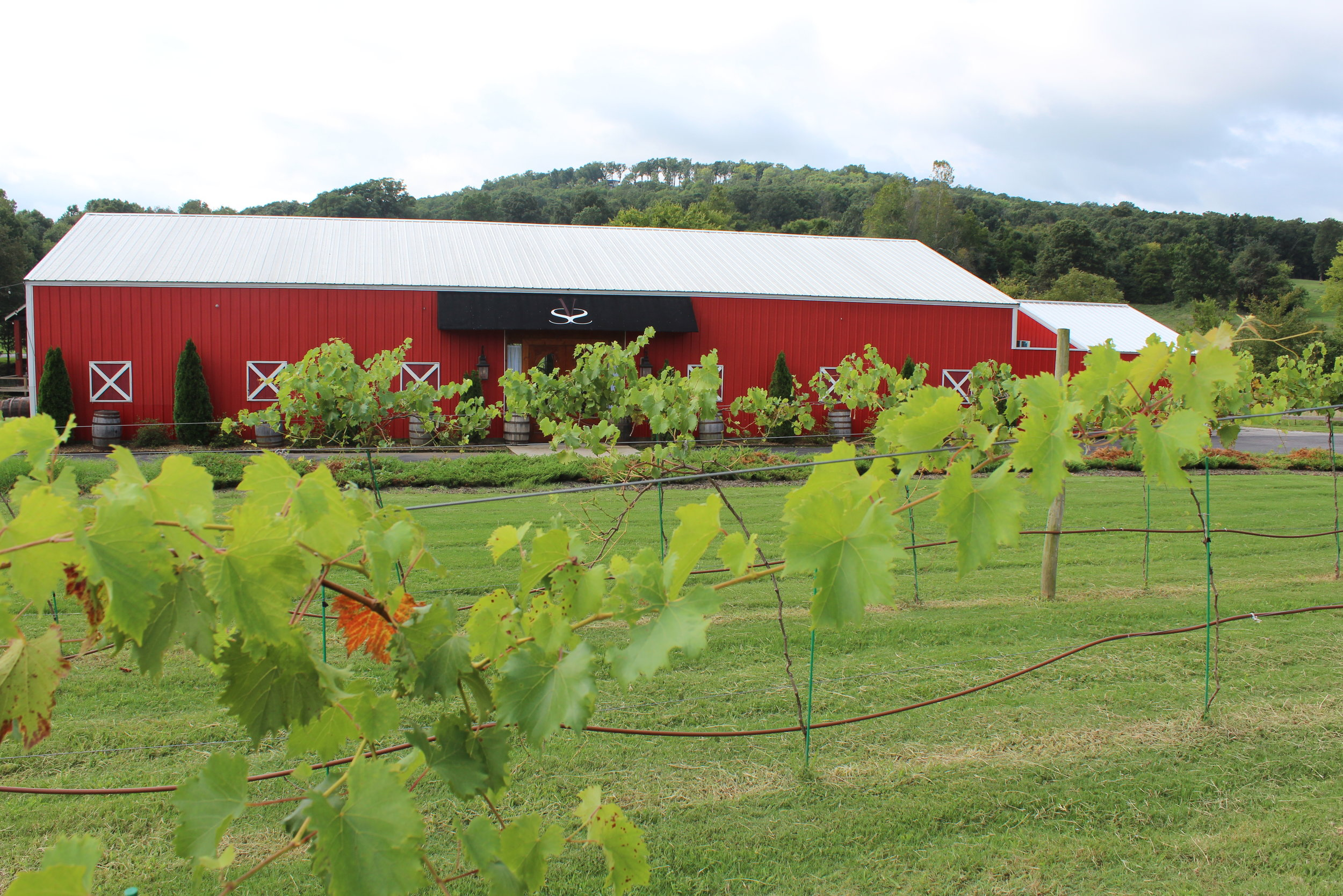 A former horse barn now hosts elegant weddings and community events at Sassafras Winery in Springdale.