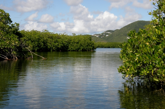 Mangroves play a critical role in the land and sea environments.