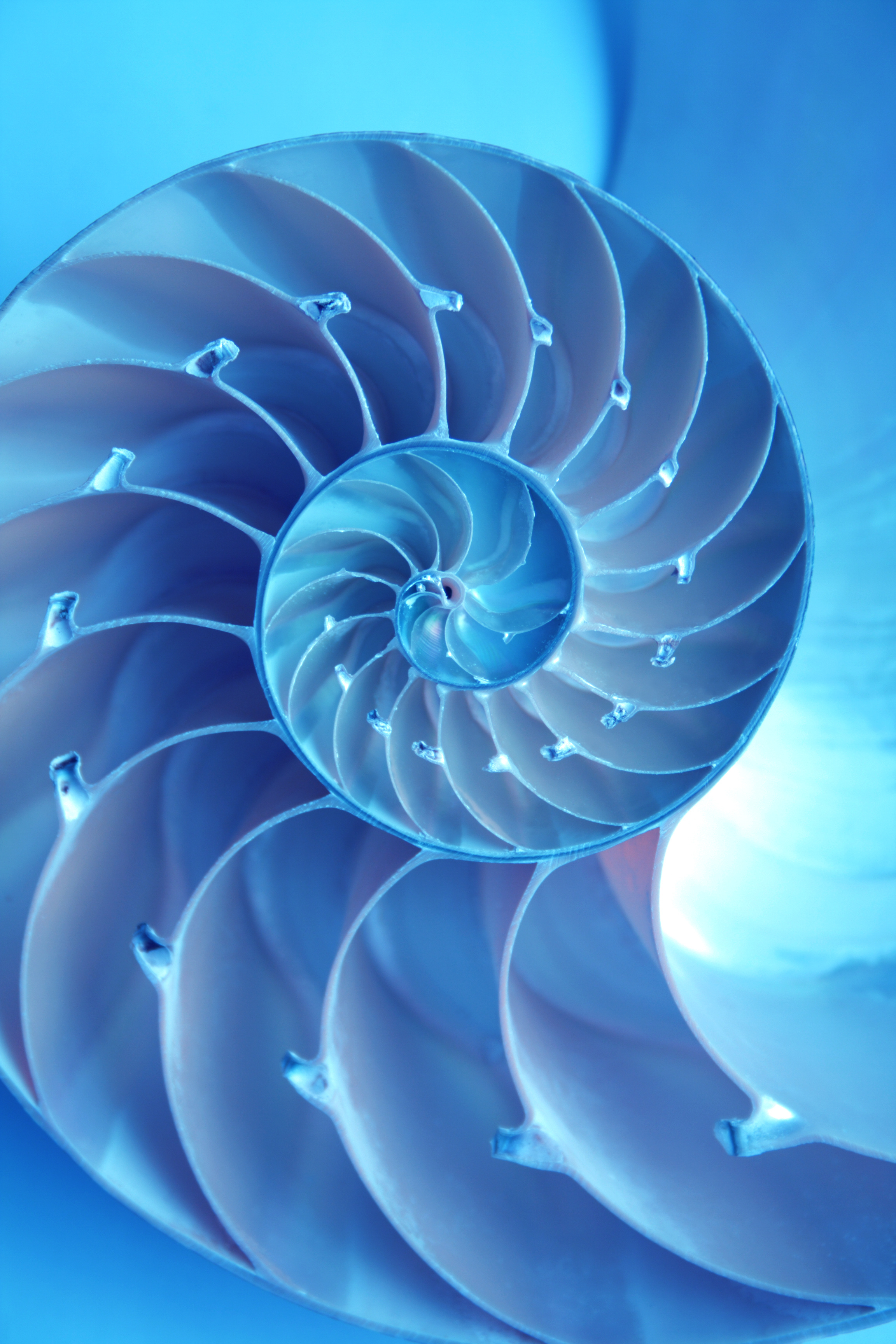 "The Nautilus shell is often associated with the ""golden ratio""."