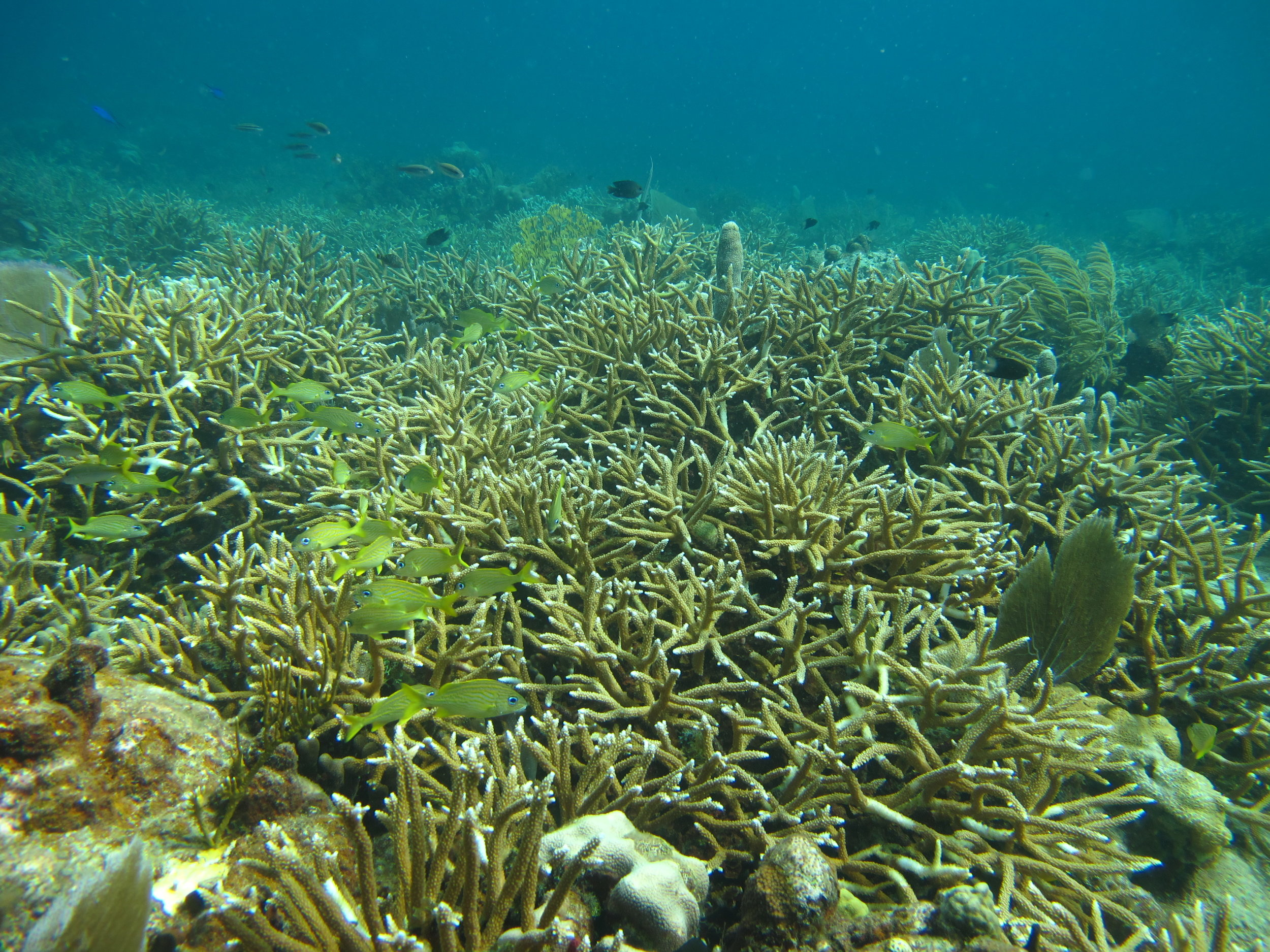 This healthy coral garden thrives at Flat Cay on the south side of St. Thomas.