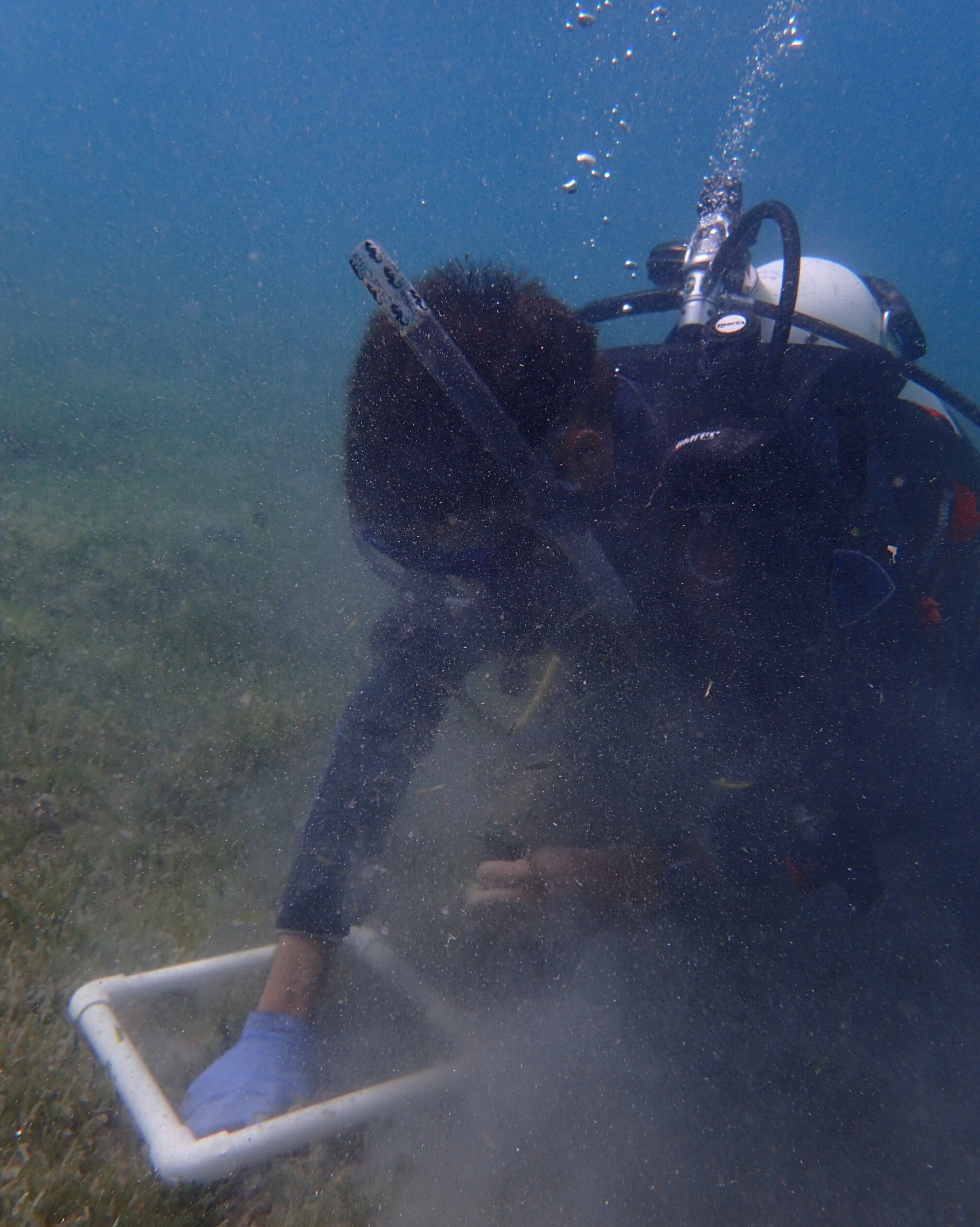 John Cassell using SCUBA gear to collect seagrass for nutritional analysis at a sample location within Brewers Bay.
