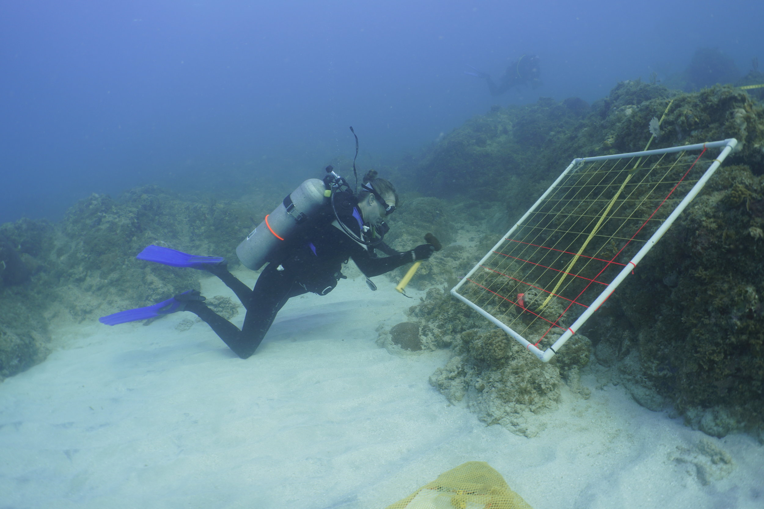 Dr. Julie Olson, a Professor of Biology at the University of Alabama and Co-Principal Investigator for the research cruise, takes data on the abundance of sponges and macroalgae on St. Thomas reefs.