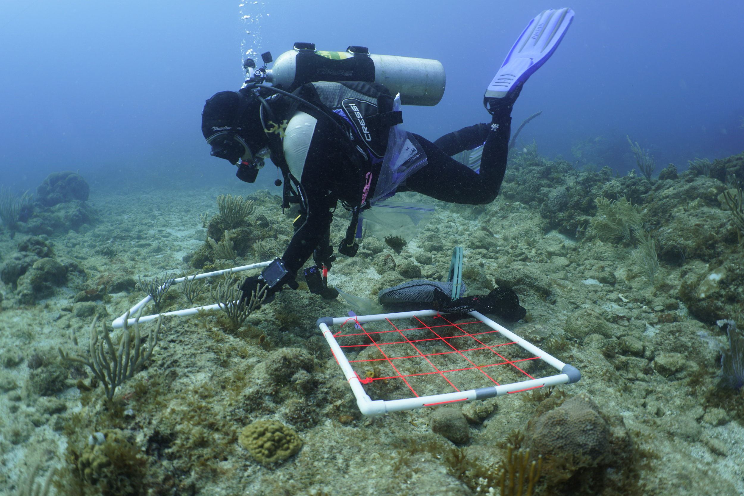 Dr. Andia Chaves-Fonnegra, a Post-doctoral Associate at the University of the Virgin Islands, sets up an experiment to determine how coral reefs in the Virgin Islands are responding to the passage of the hurricanes.