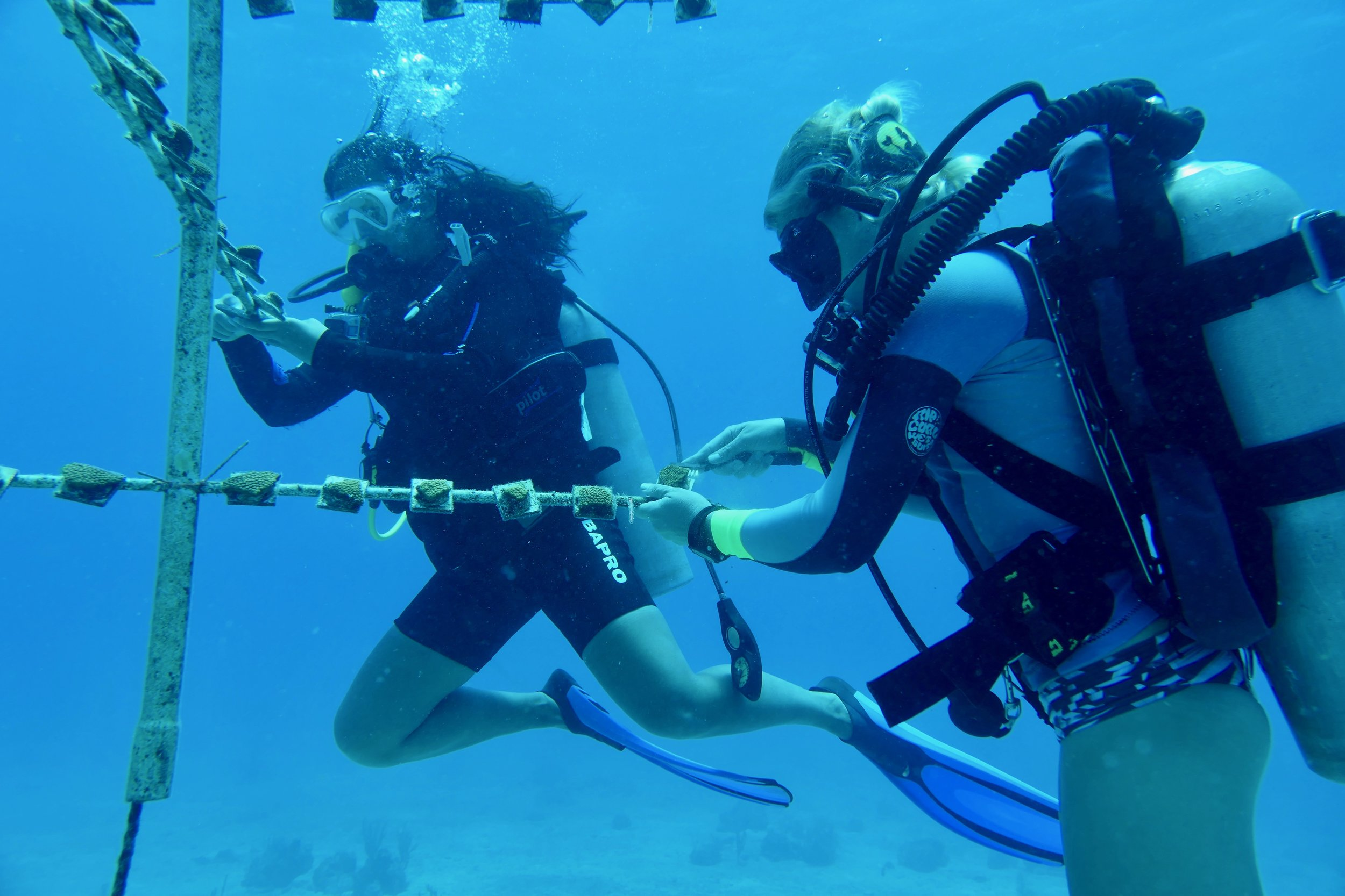 Volunteers clean algae of the coral trees at the Flat Cay, St. Thomas nursery.