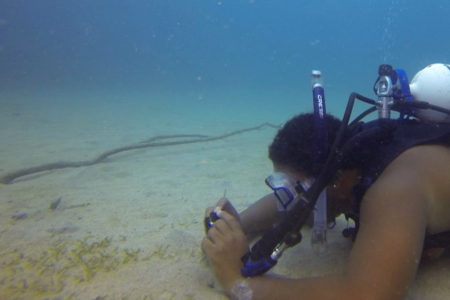 Kyle scuba dives to takes close-up pictures of his subject. Photo: Joe Townsend