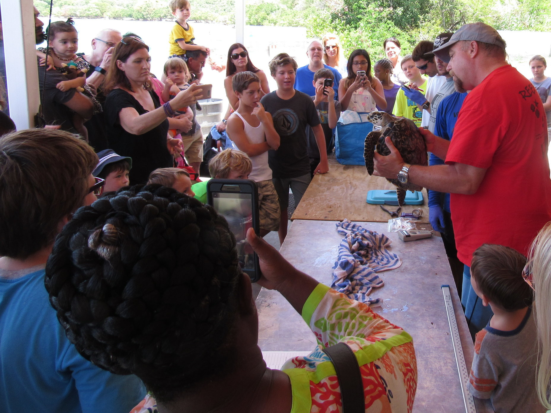 Dr. Paul Jobsis, seen above in red, shows a juvenile hawksbill sea turtle to participants of a recent Turtle Tagging event. For many, this is a s closed as they will get to a sea turtle as regulations are extremely restrictive. All work with turtles by UVI researchers are conducted pursuant to a NFMS permit.