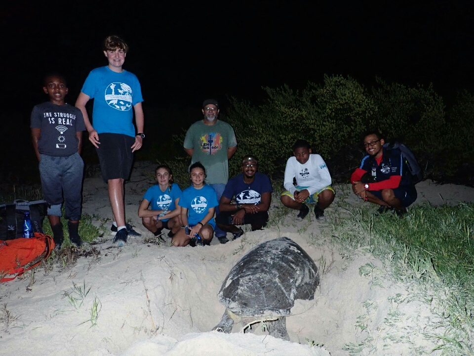 At 7pm, only 2 hours after beginning patrols, the first sea turtle was spotted. This mama green sea turtle, the  Chelonia mydas  was estimated to weigh around 300 pounds. Once ashore she began clearing vegetation and digging her nest.