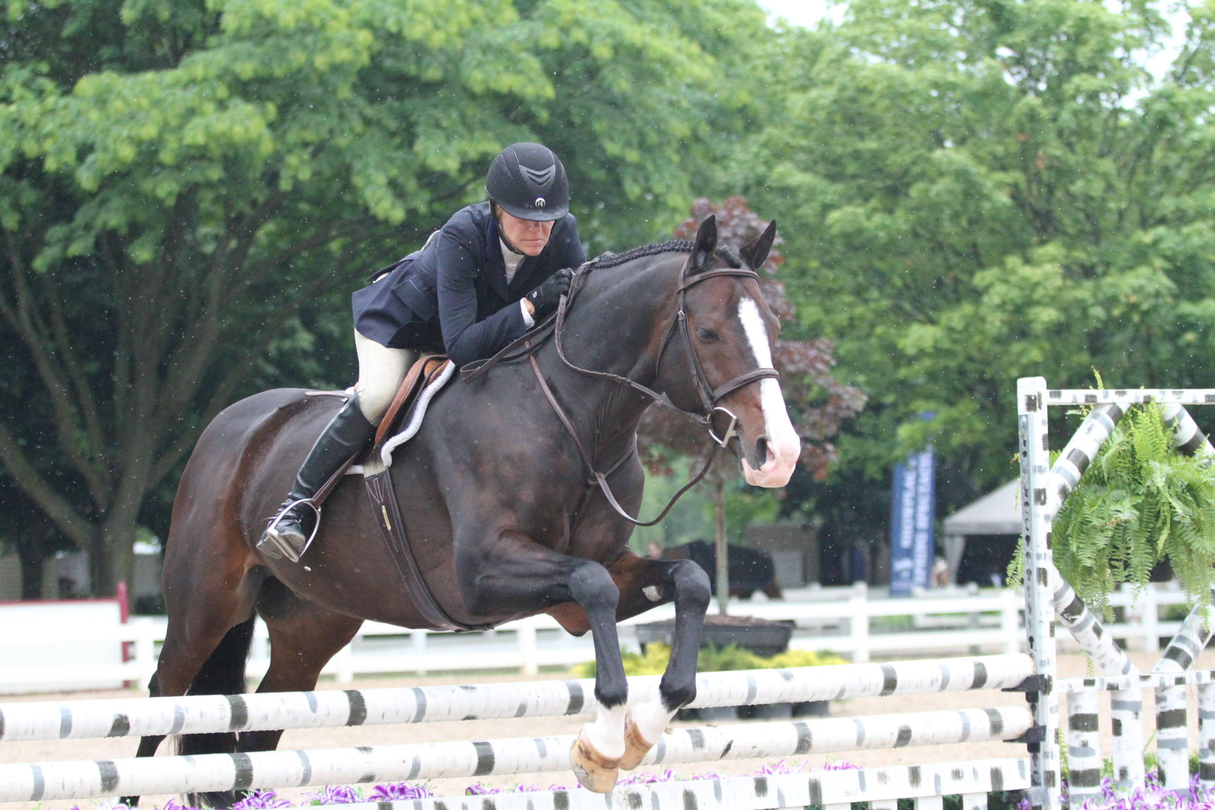 Playbook, owned by Beth Bailey and ridden by Kara Raposa earned the tricolors of the $2,500 Performance Working Hunter 3'3 division.