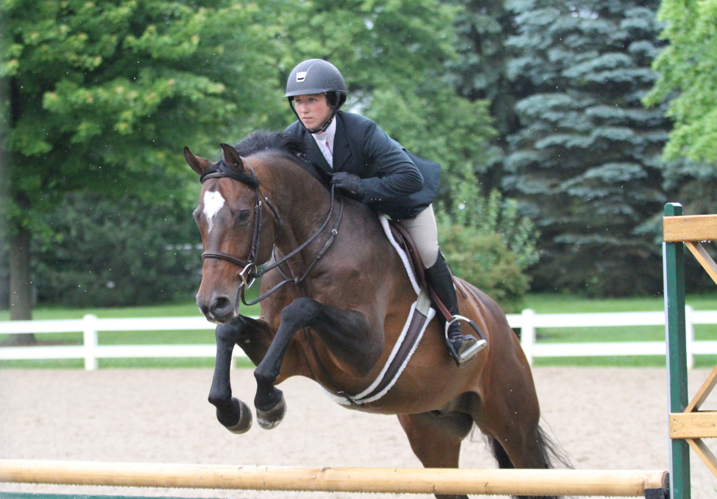 "Non Thoroughbred Hunter Champion  Cullen, ridden by Mara Kranz and owned by Anne Donovan ""We were back after a few months off, and he dialed it in and got ready. He's very athletic, sassy and has his own agenda, but he put it to work today."" Mara Kranz"