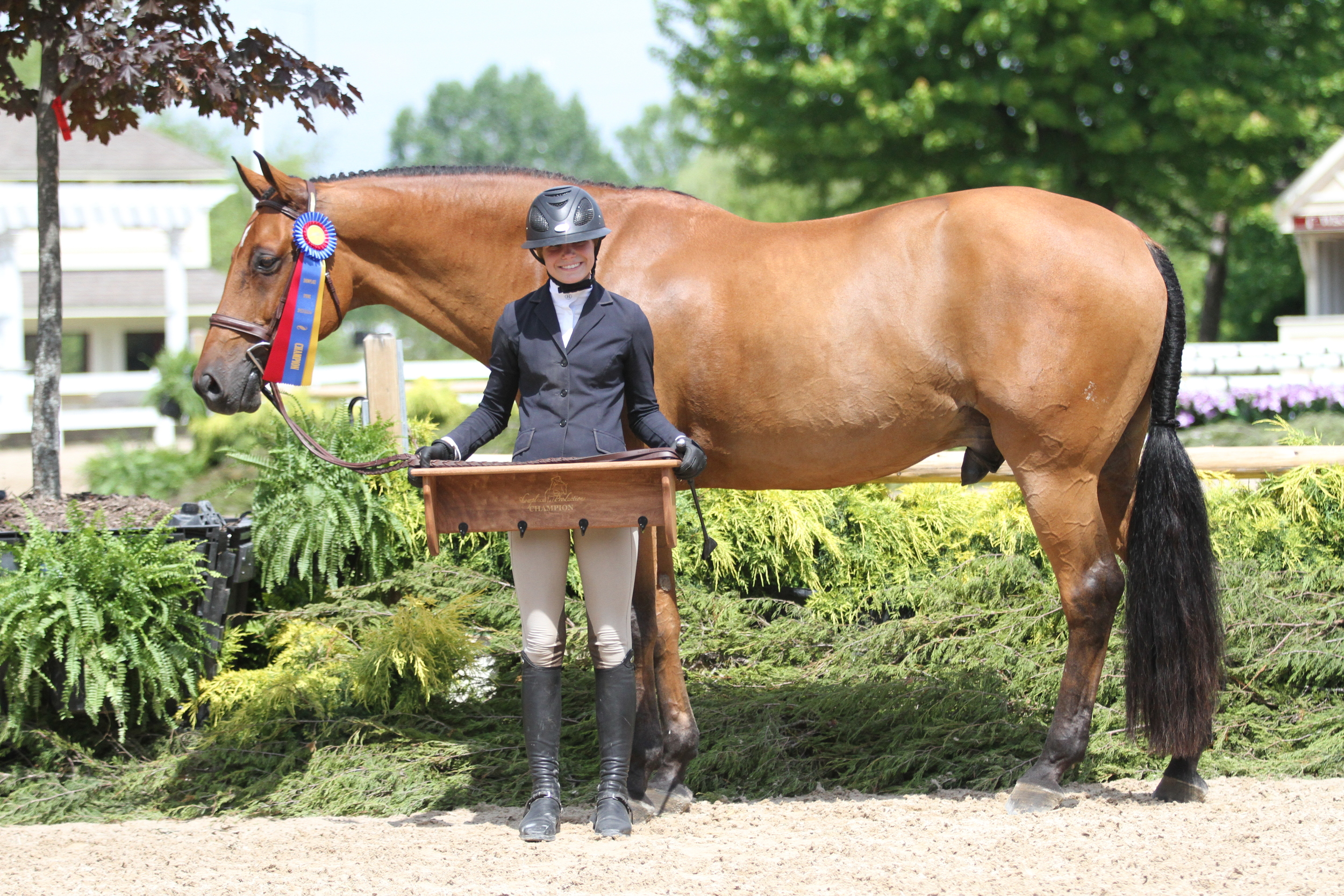 Large Junior Hunter Champion    Coachella, owned and ridden by Sloan Hopson, took top honors as the large junior hunter champion.