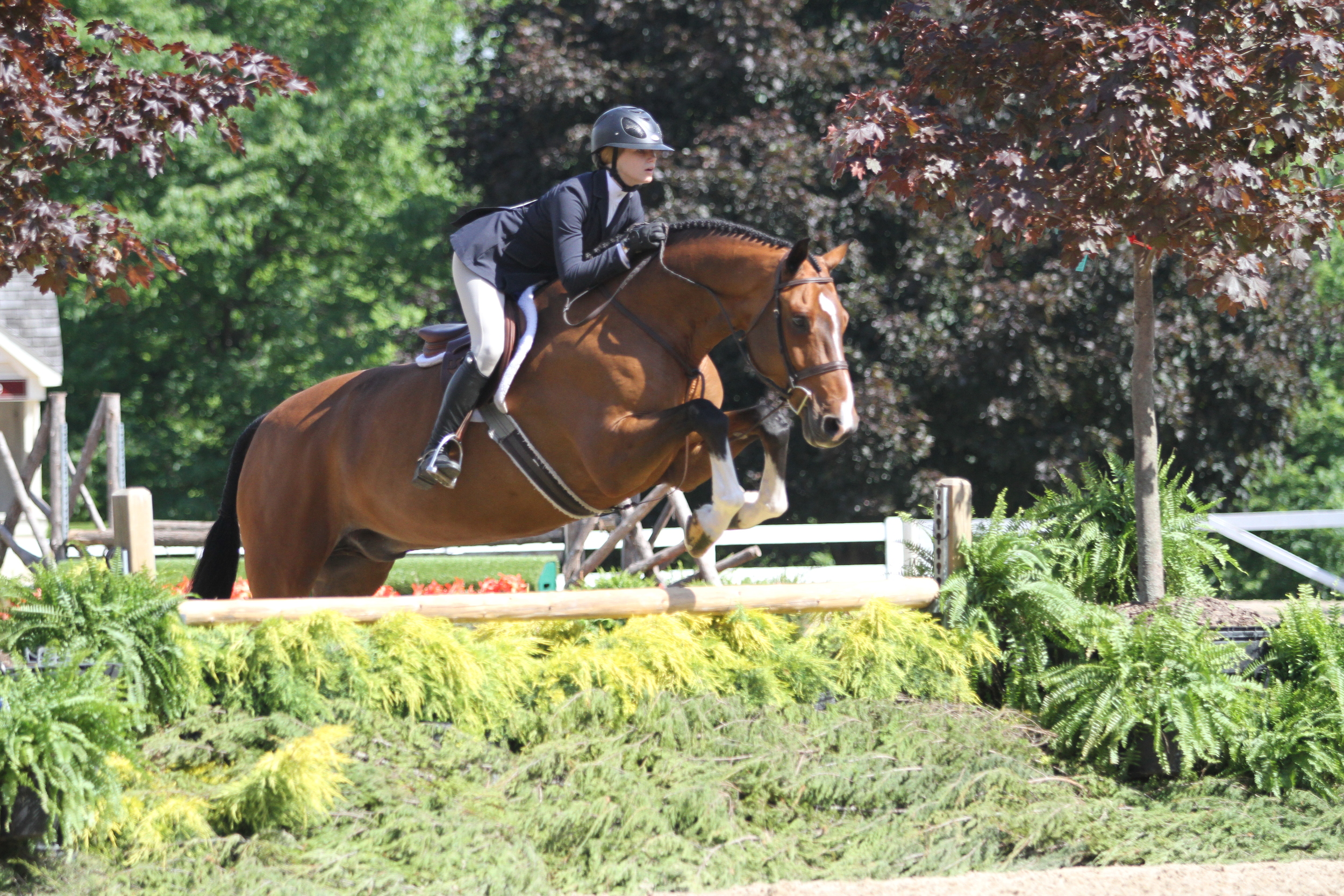 Large Junior Hunter Reserve Champion    Chalk Hill, owned by Kaley Roeske and ridden by Sloan Hopson, finished second in the large junior hunter behind barn-mate Coachella.