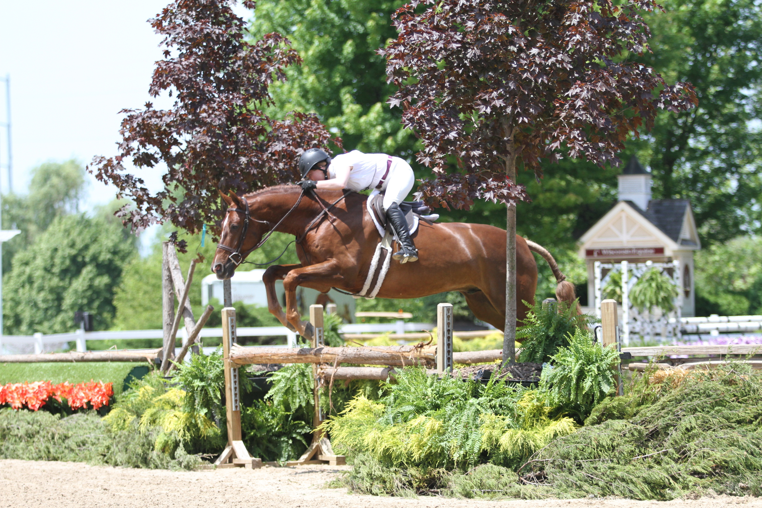 """Amateur Owner 3'3"""" leader    Heading into the final rounds tomorrow, Topaz, owned by Pony Lane Farm and ridden by Kelsey Thatcher, holds a top position with a win in the over fences and hunter under saddle classes."""