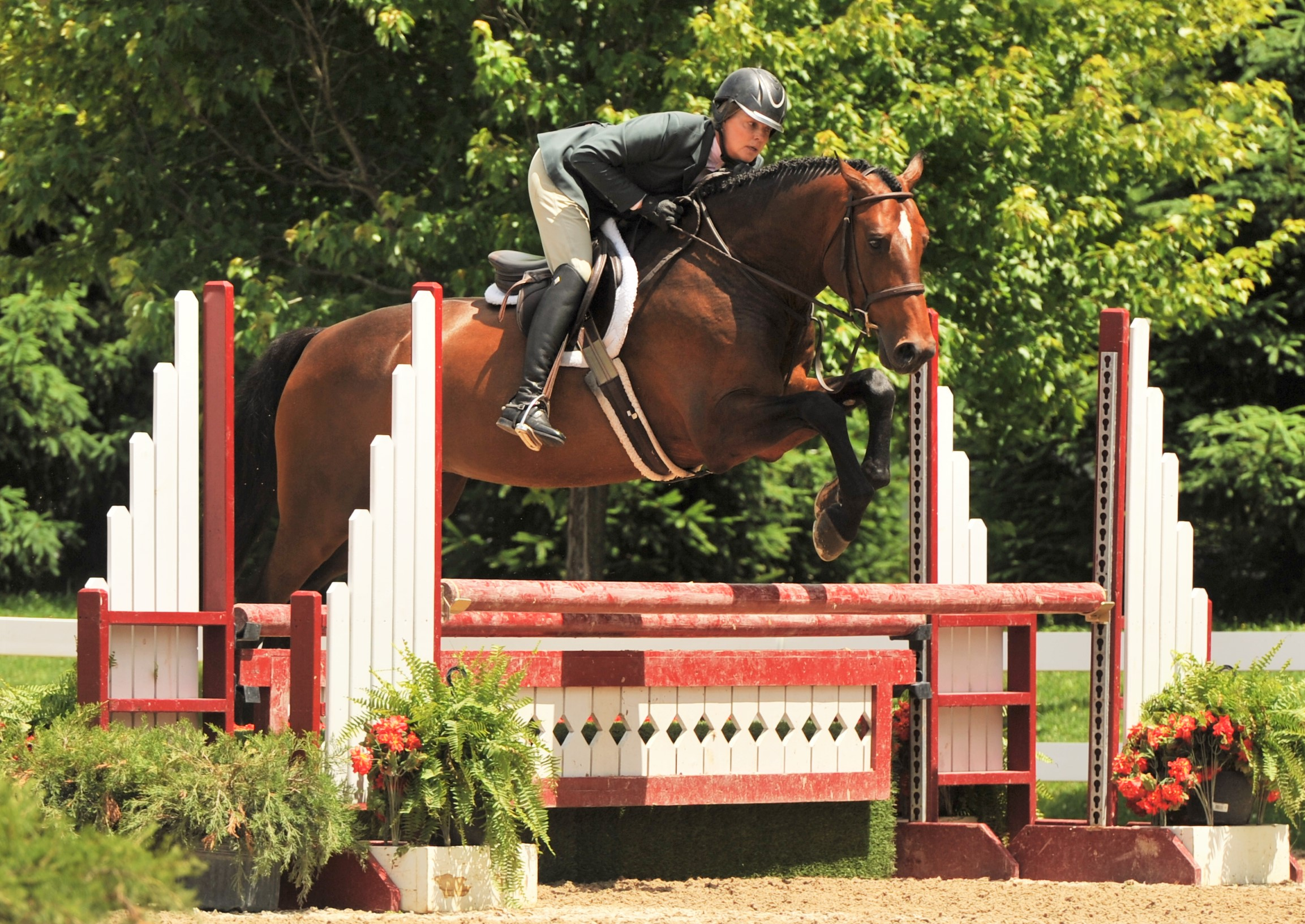 MTM Outbid and Tracy Fenney - Photo by Andrew Ryback Photography    $1000 Pre Green Hunter Challenge    MTM Outbid, owned by MTM Farm and ridden by Tracy Fenney, snagged the top title in the $1000 Pre Green Hunter Challenge.