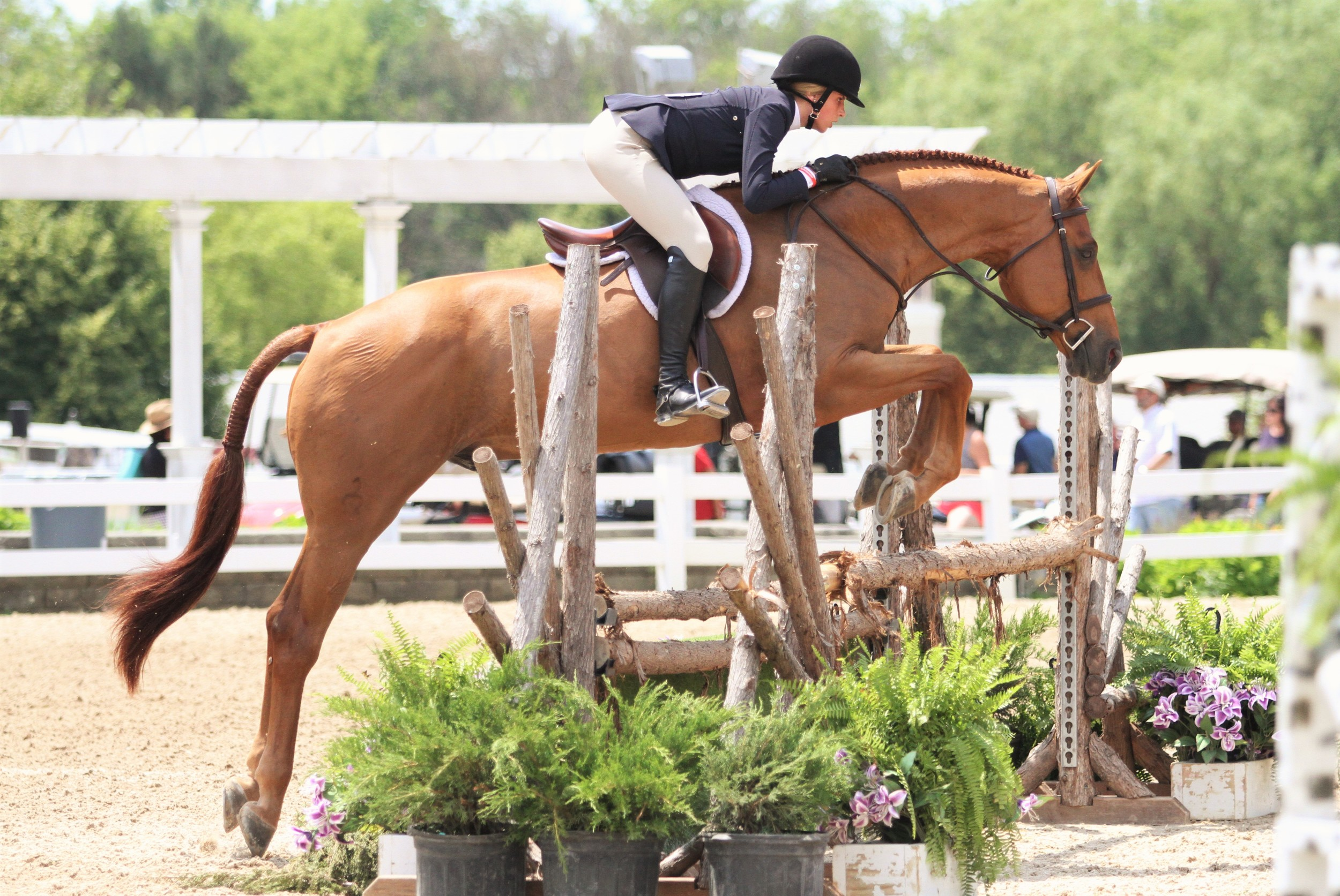 """Junior Hunter 3'3"""" Champion  Czech Mate, owned and ridden by Carly Martin, topped the Junior Hunter 3'3"""" division."""