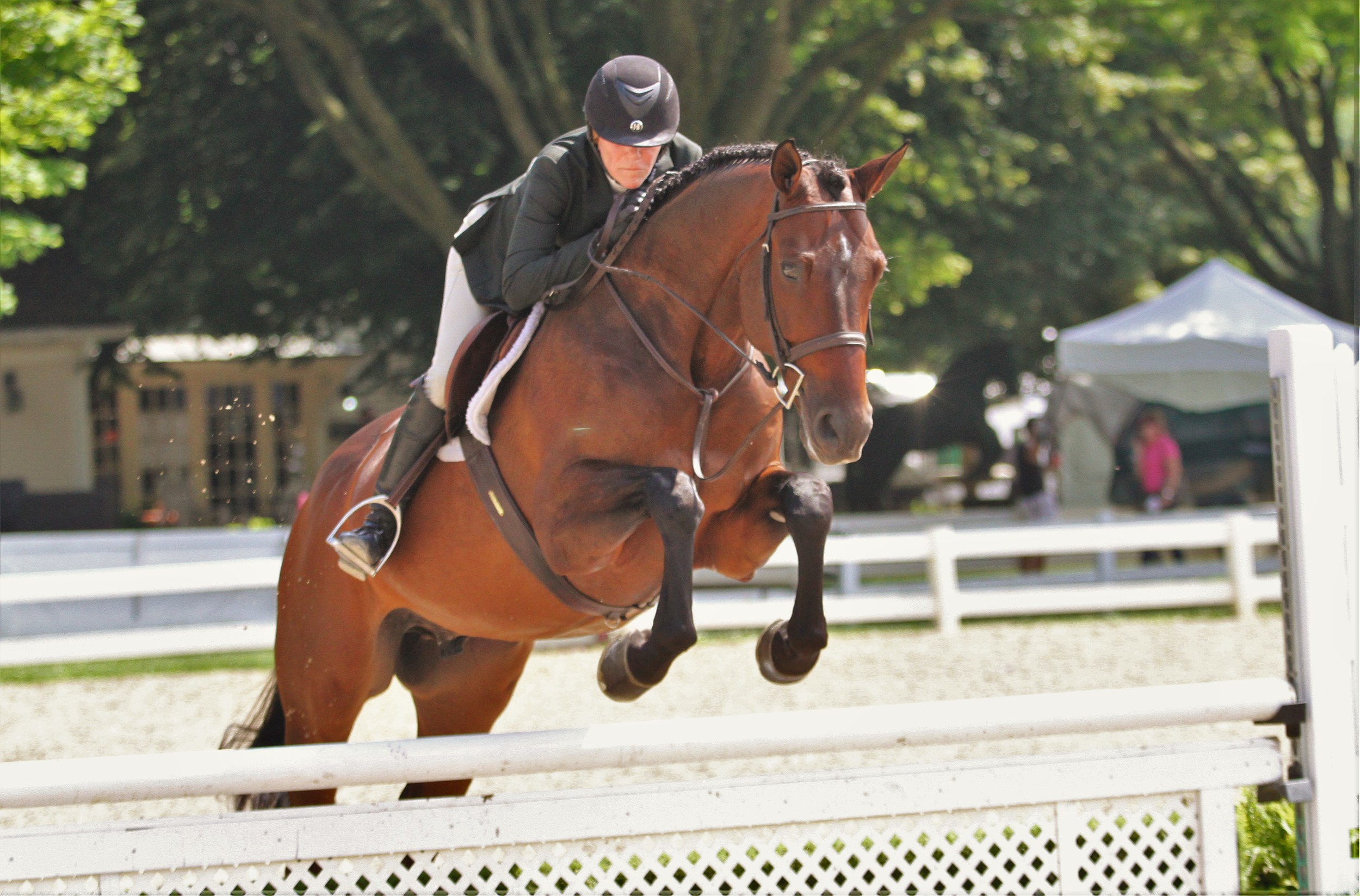 """Performance Working Hunter 3'3"""" Counting Stars, owned by Kim Calamos, ridden by Kara Raposa"""
