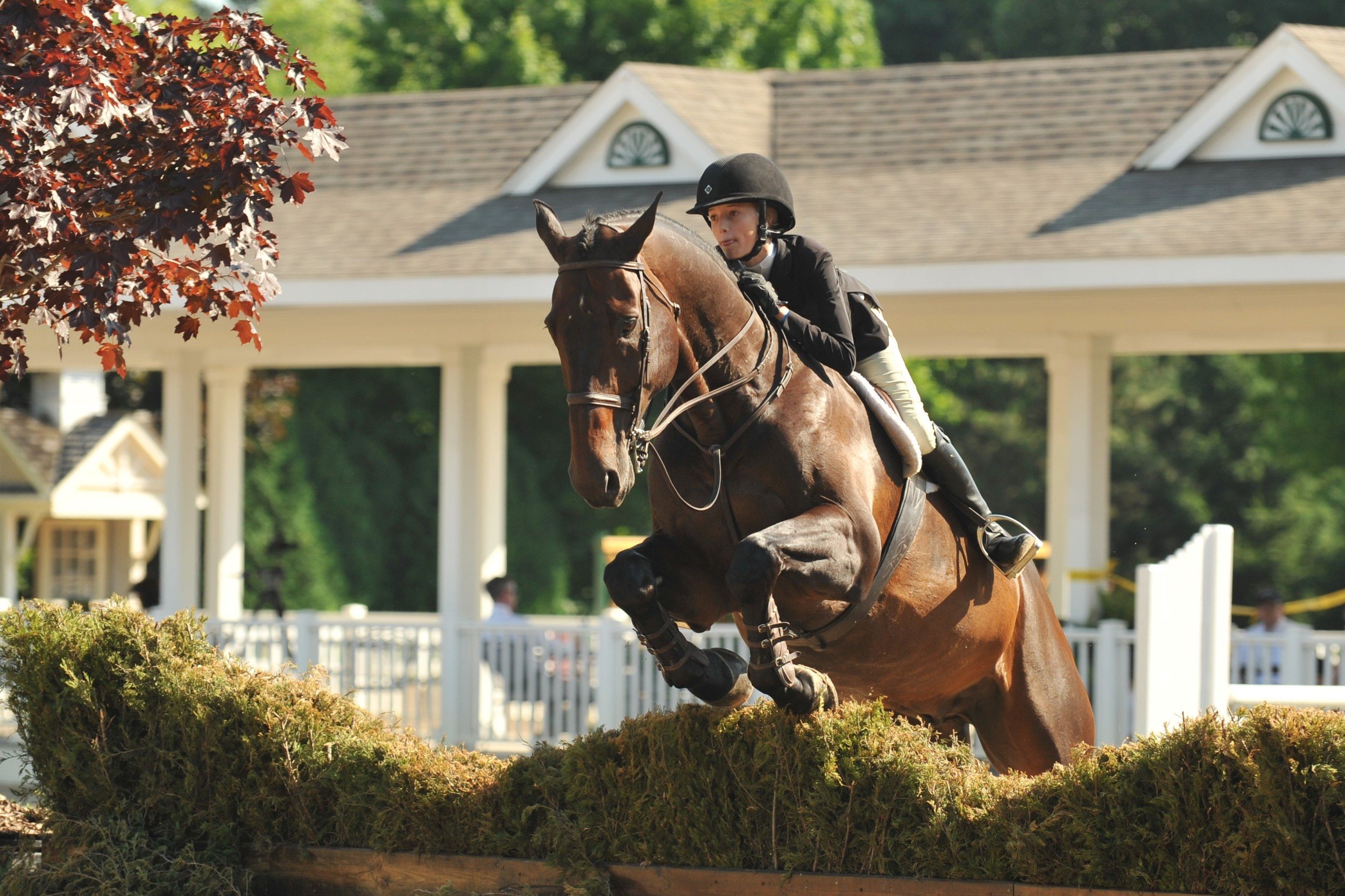 Photo by Andrew Ryback Photography  USEF/Pessoa Hunt Seat Medal  Natalie Jayne riding her horse Cyril Van de Mespel Z