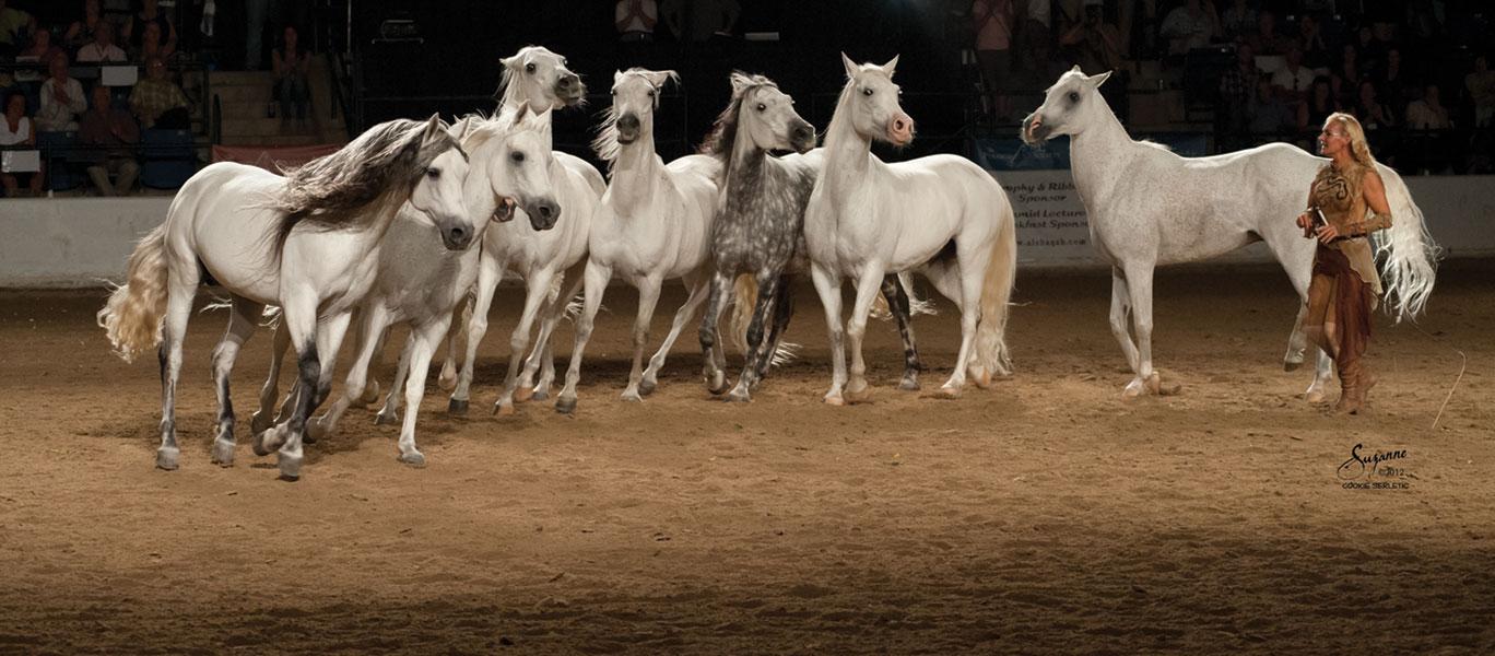 Former Cavalia performers Sylvia Zerbini and her liberty stallions. Photo by courtesy of Sylvia Zerbini