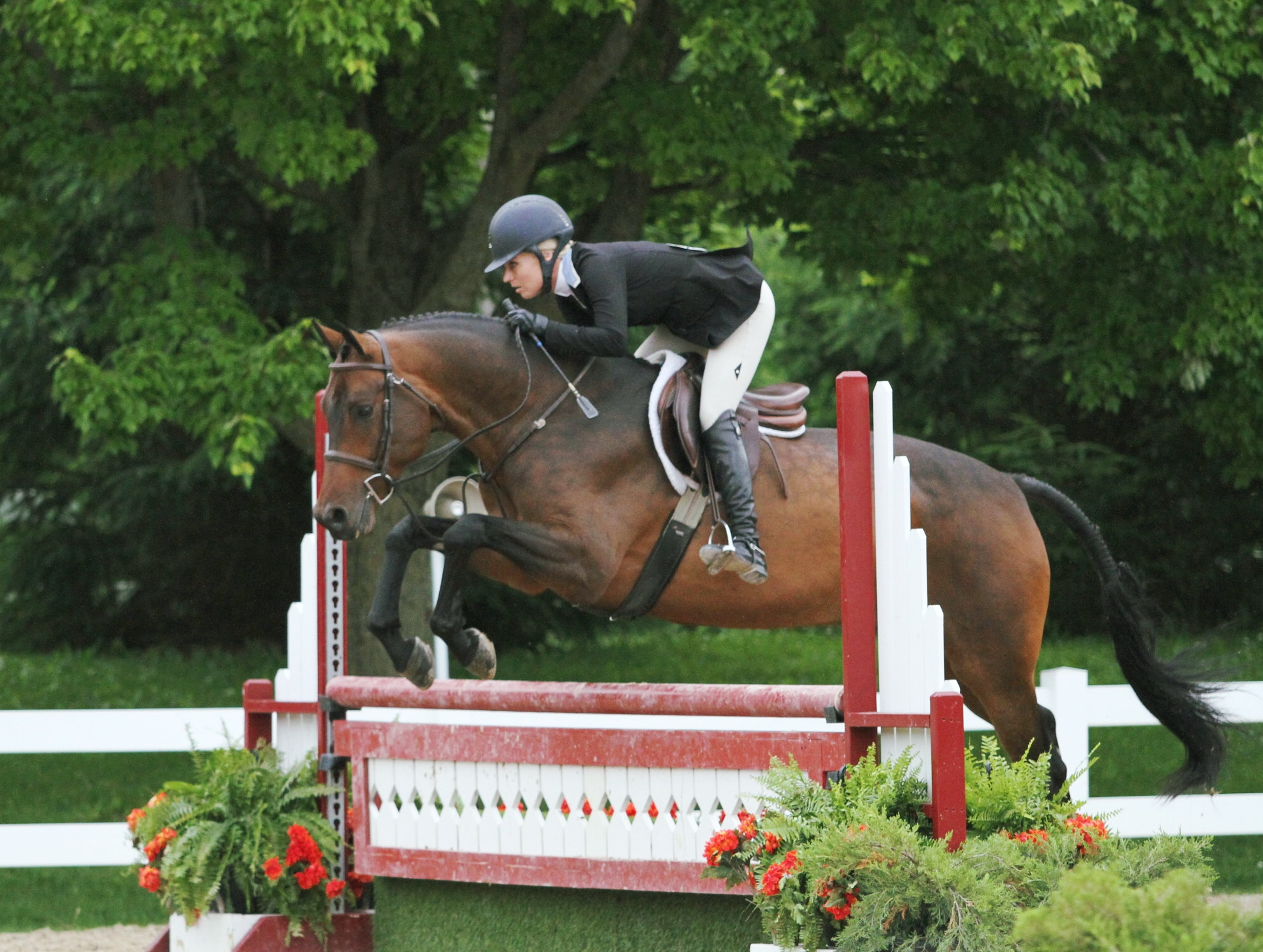 Jodi Vazquez and Quiloo, owned by Messenger Hill Farm. Photo by EQ Media.