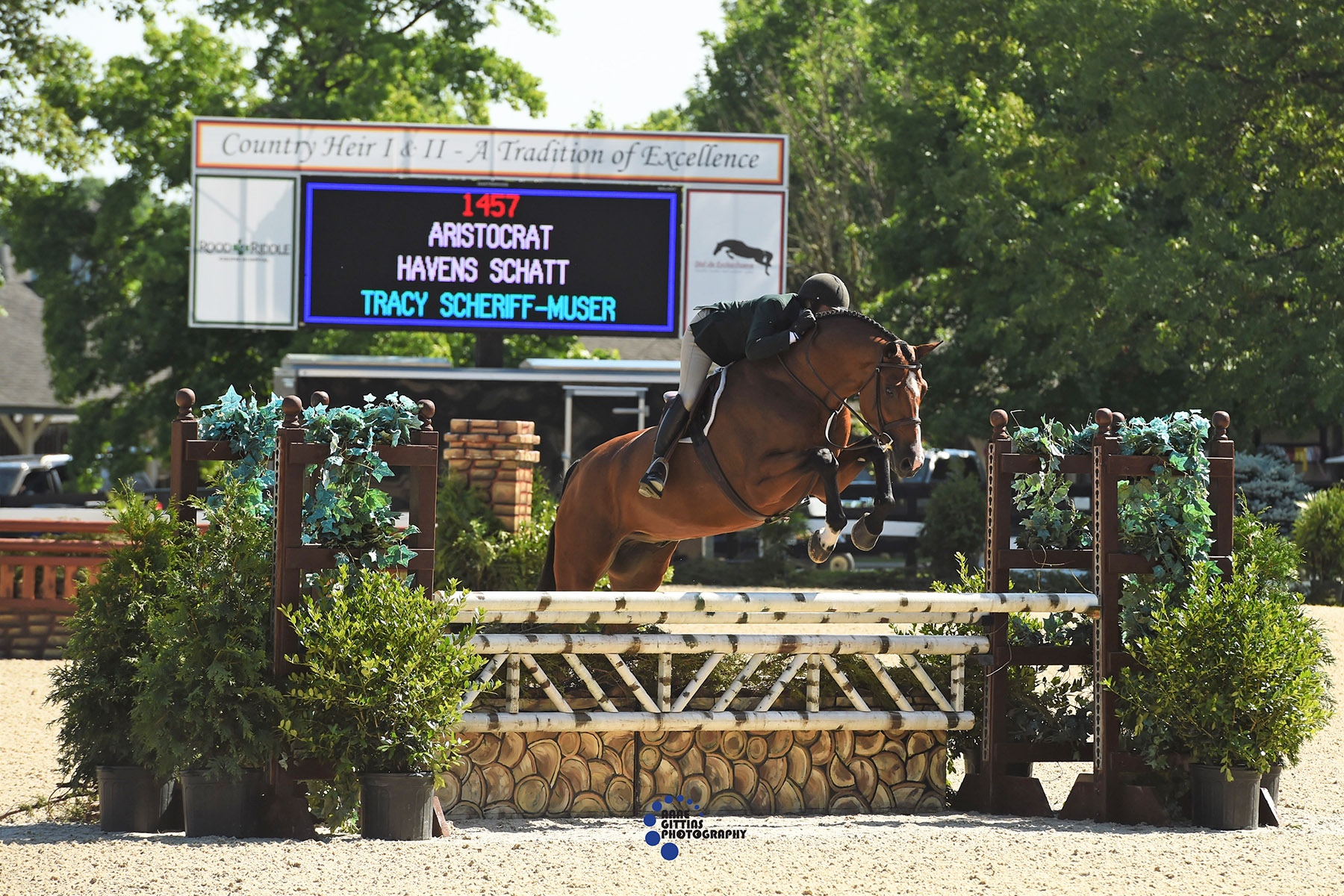 Havens Schatt and Aristocrat. Photo by Anne Gittins Photography