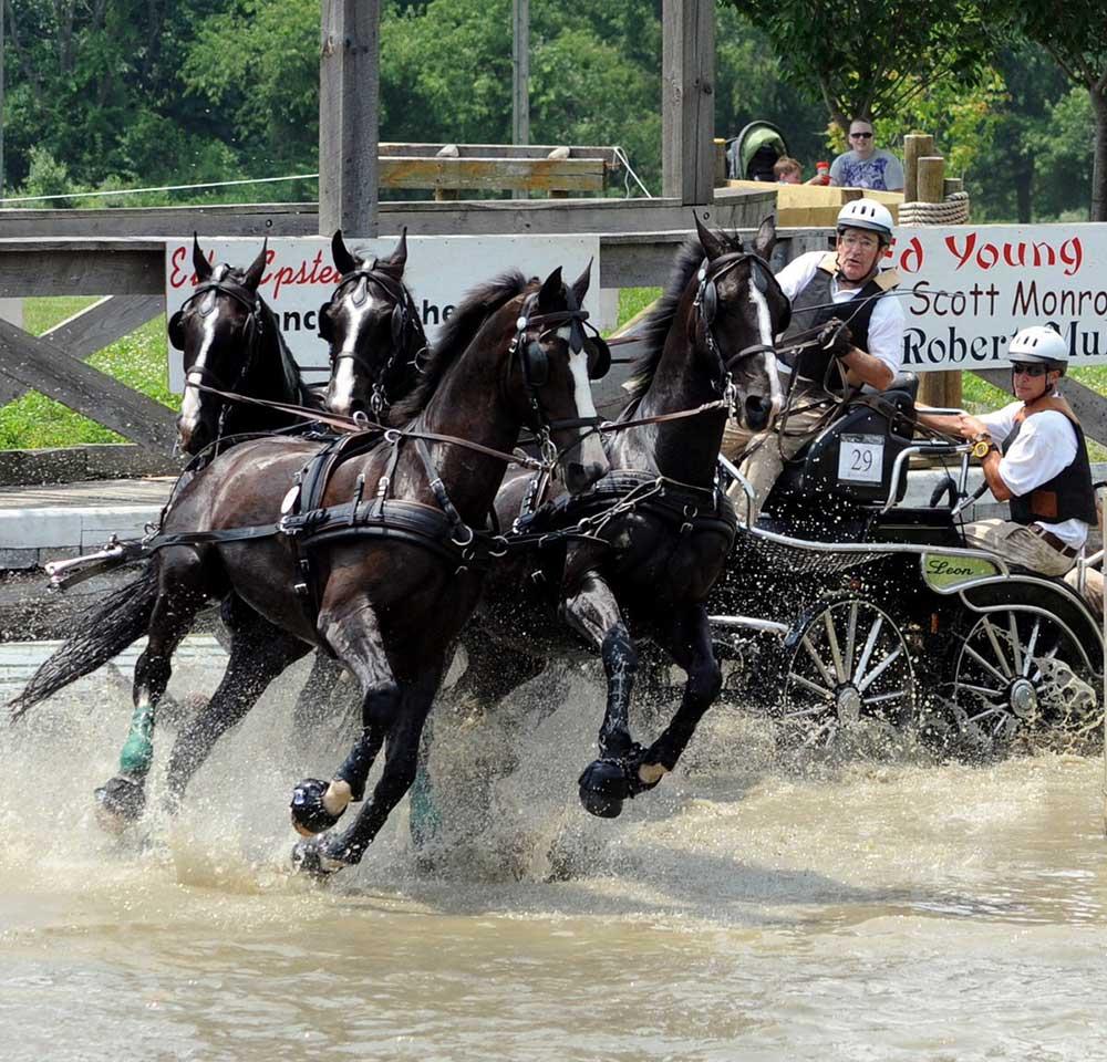 Gladstone Driving. Photo courtesy of Gladstone Equestrian Association