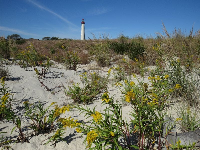 Protecting the Jersey Shore is one focus for The Nature Conservancy in New Jersey