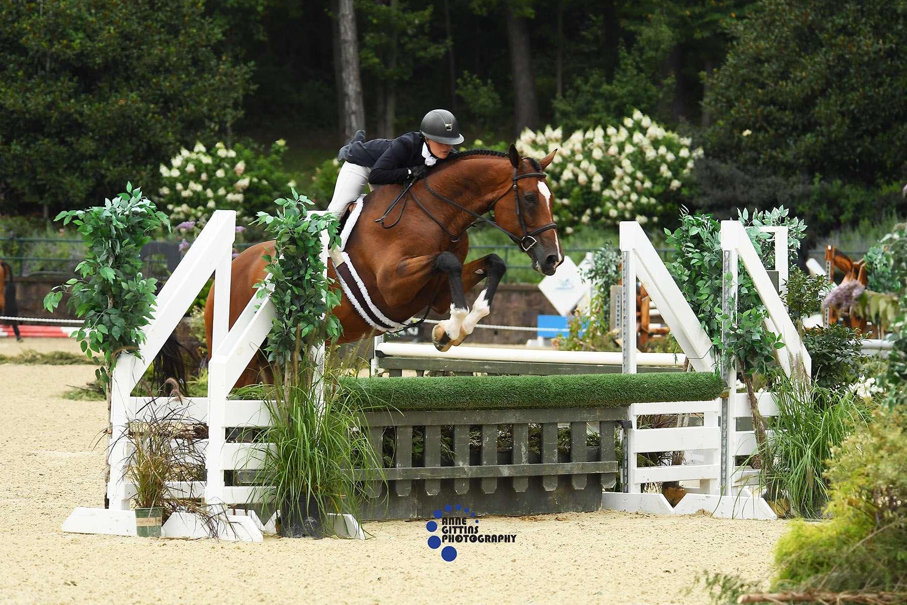 Morgan Ward and Cypress. Photo by Anne Gittins Photography