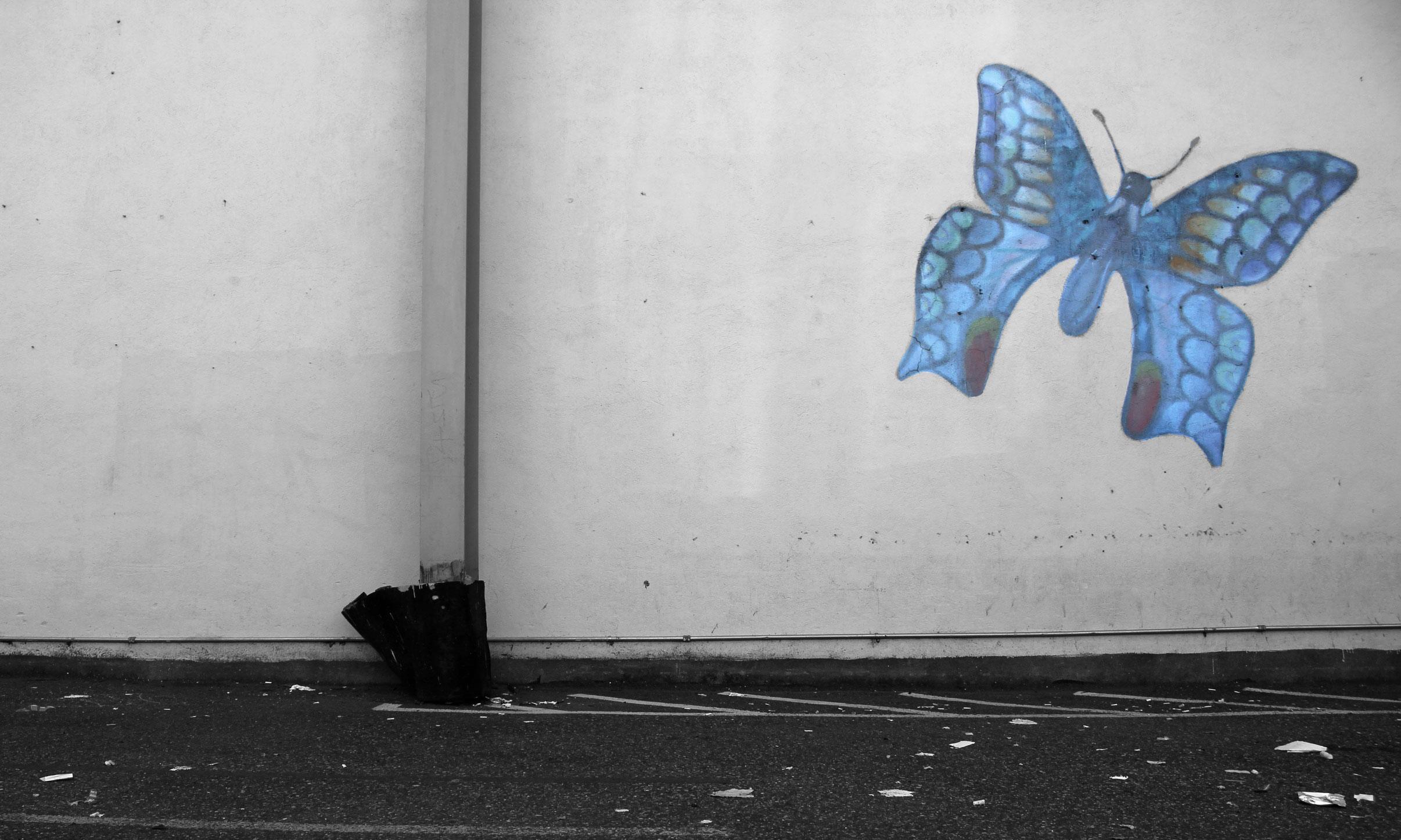 butterflyoptimized.jpg