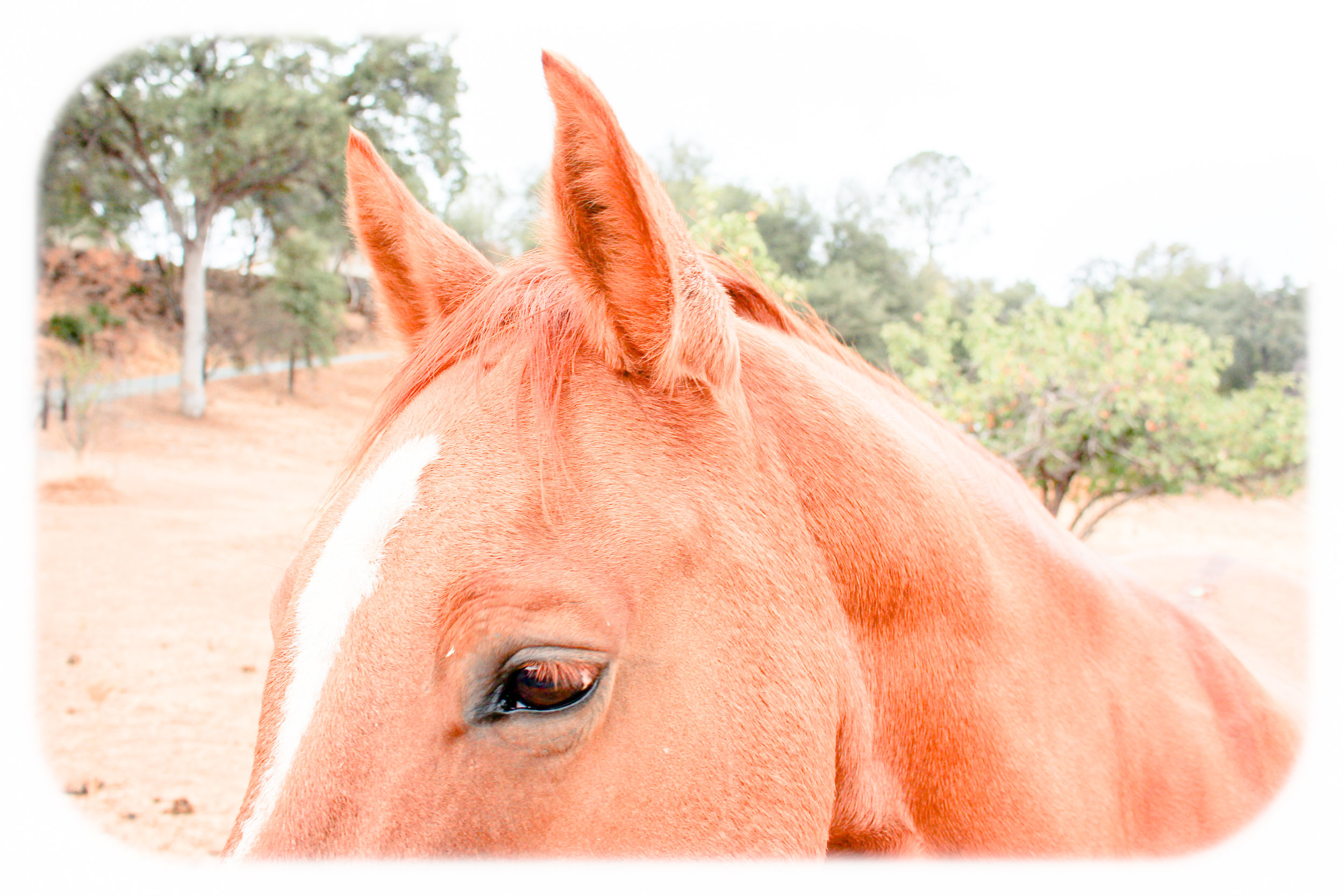 horseseras.jpg