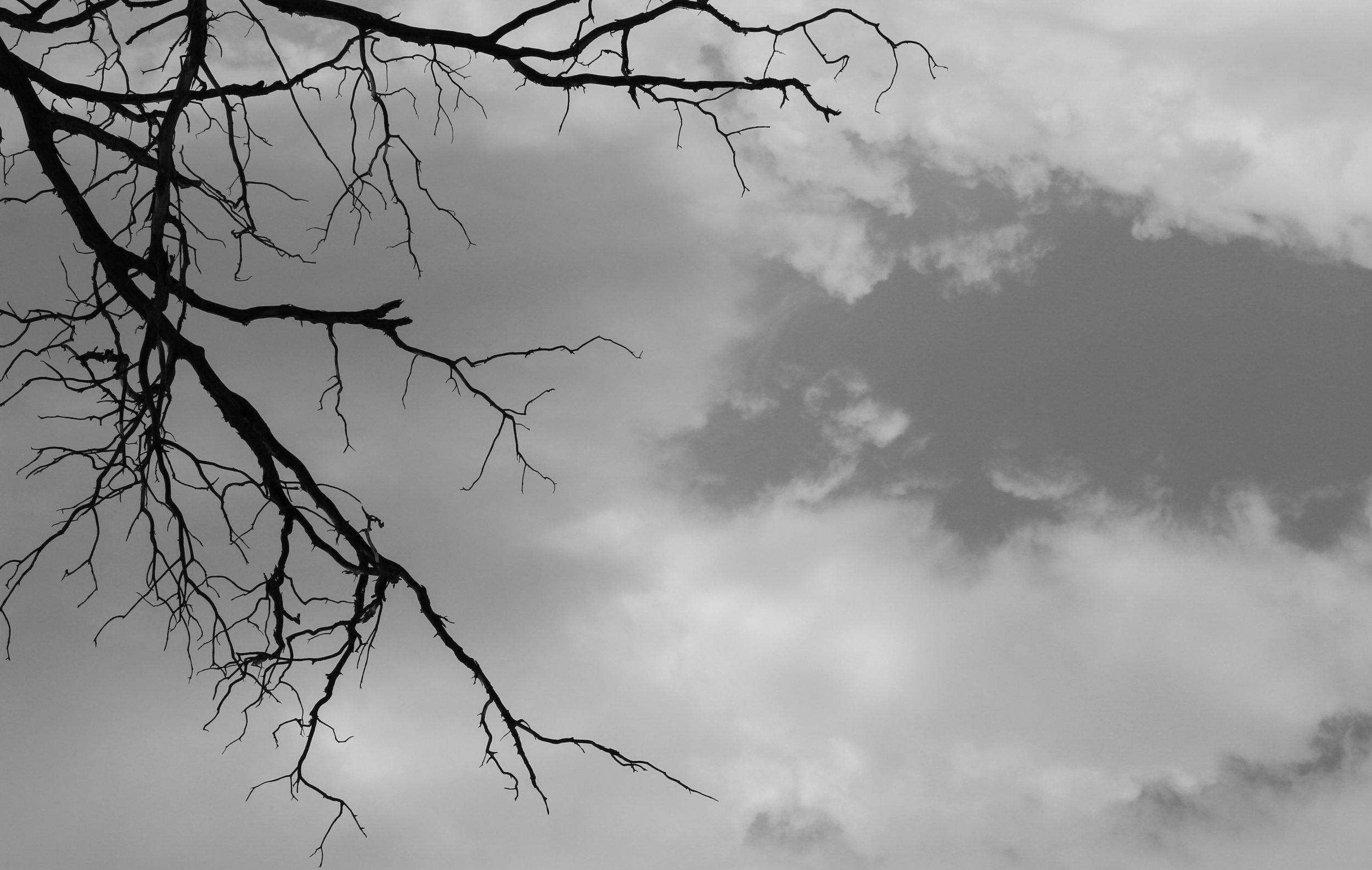 treeveins.jpg