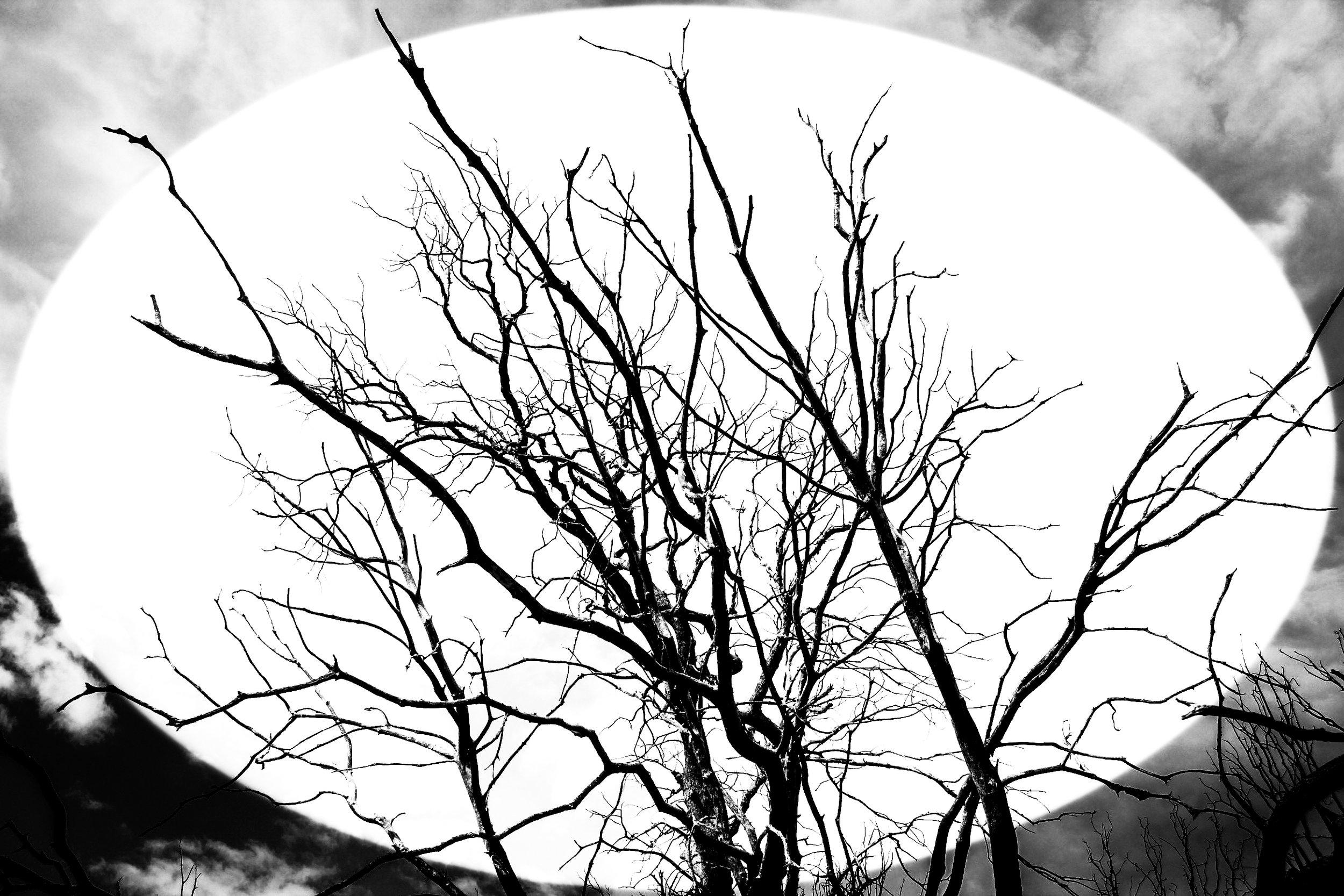 treewhites.jpg