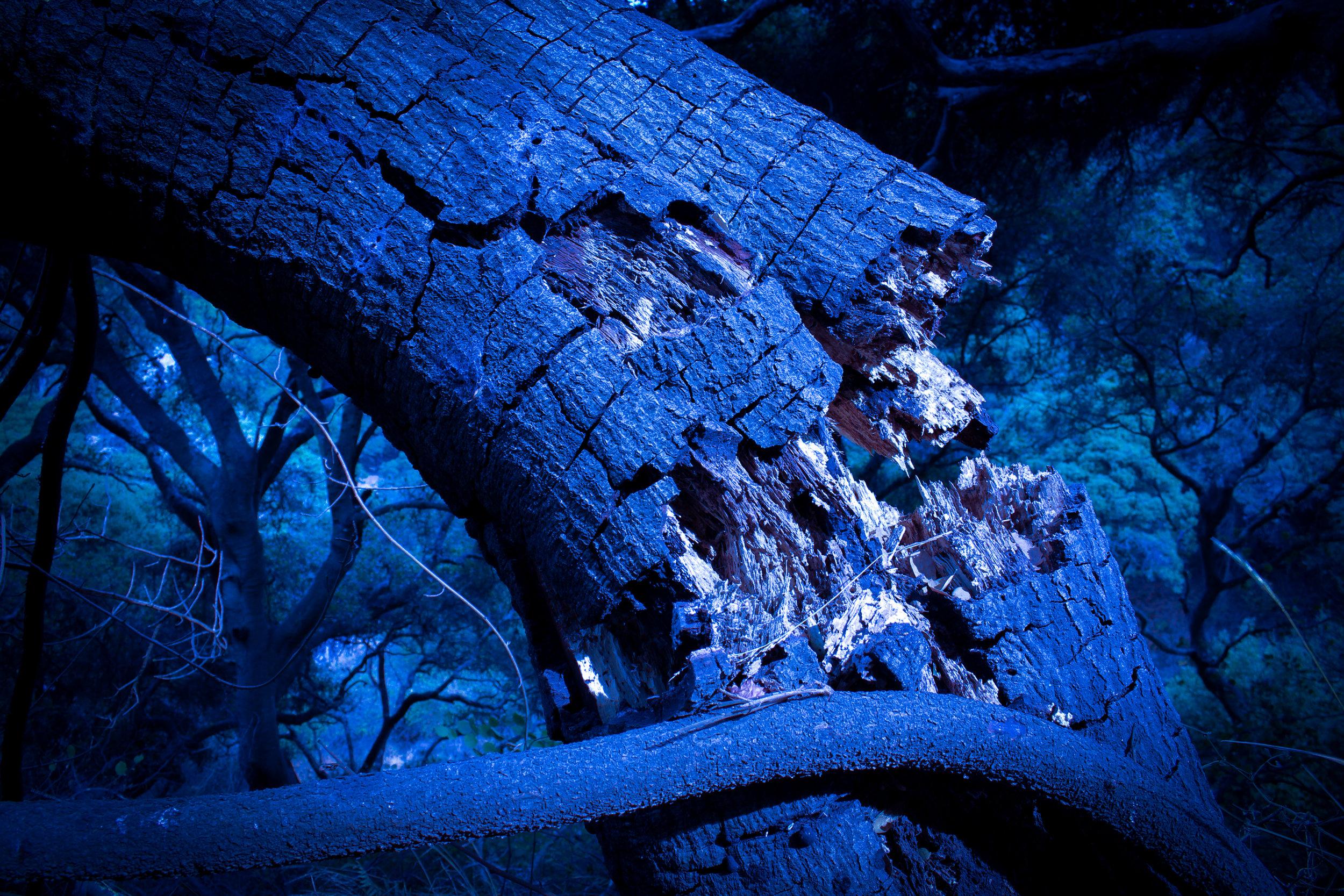 thelaughingtree.jpg