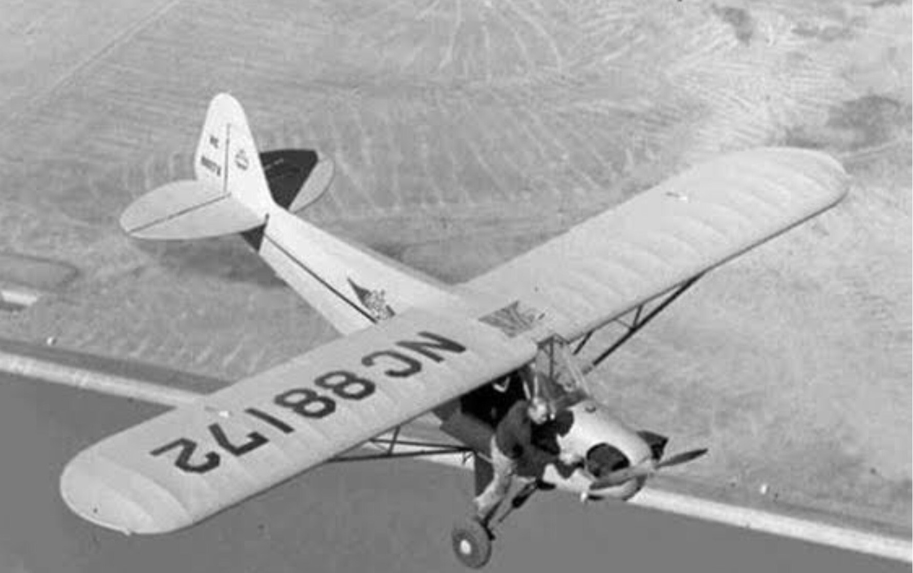 Piper 3.jpg