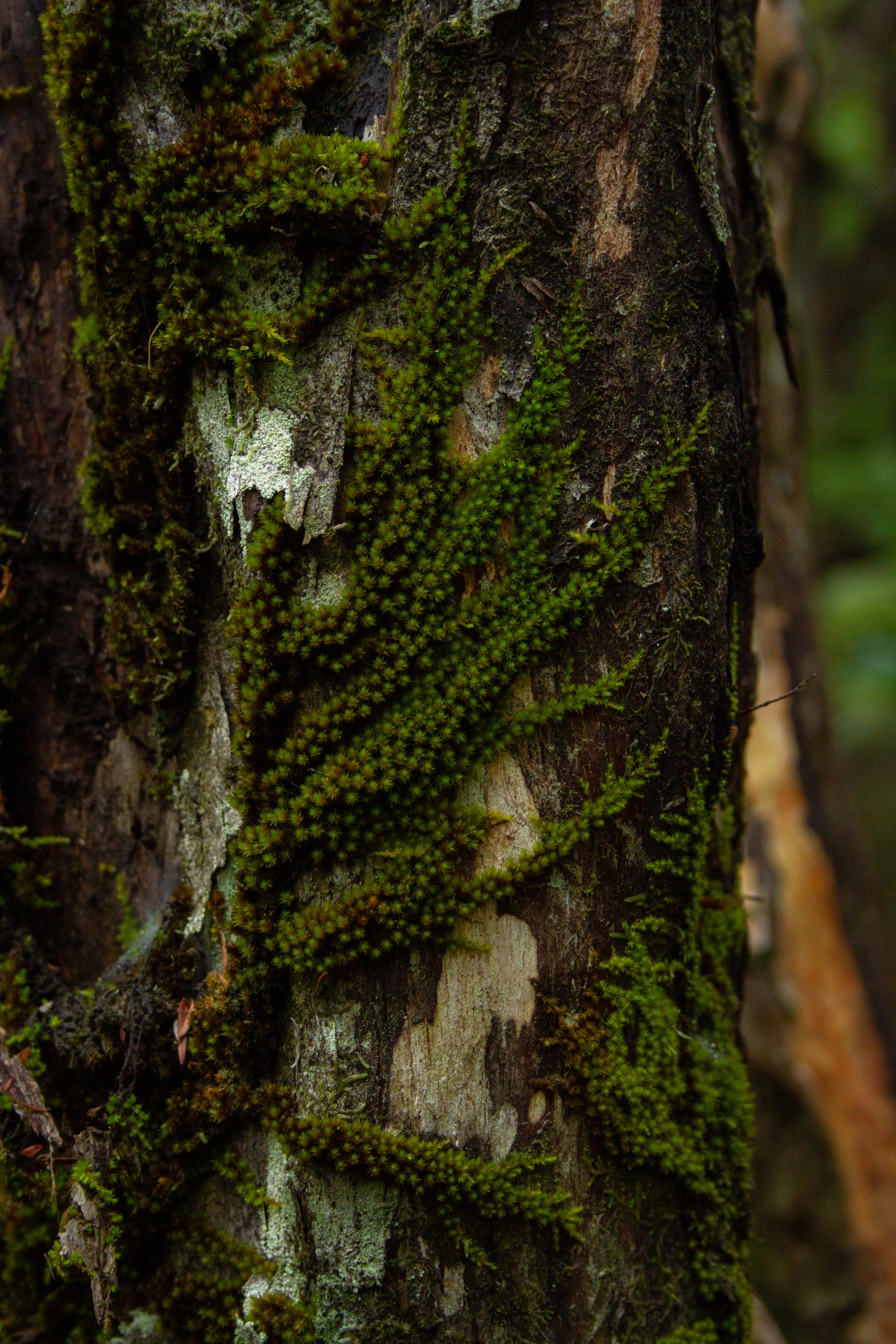 Moss, Windy Canyon, Aotea, March 2019