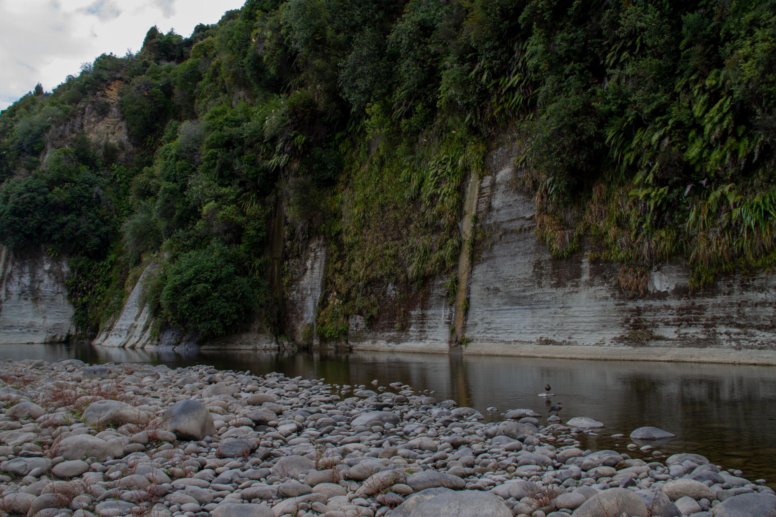 Two Whio Sleeping, Ruatiti River, Raetihi, 2019