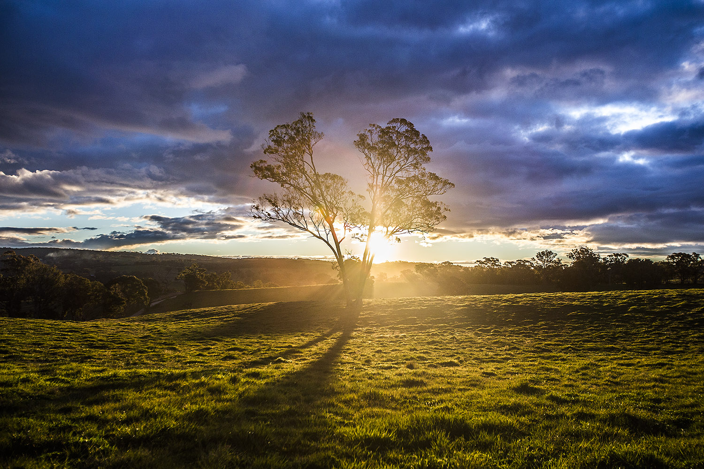 Tree Glen Outram SS.jpg