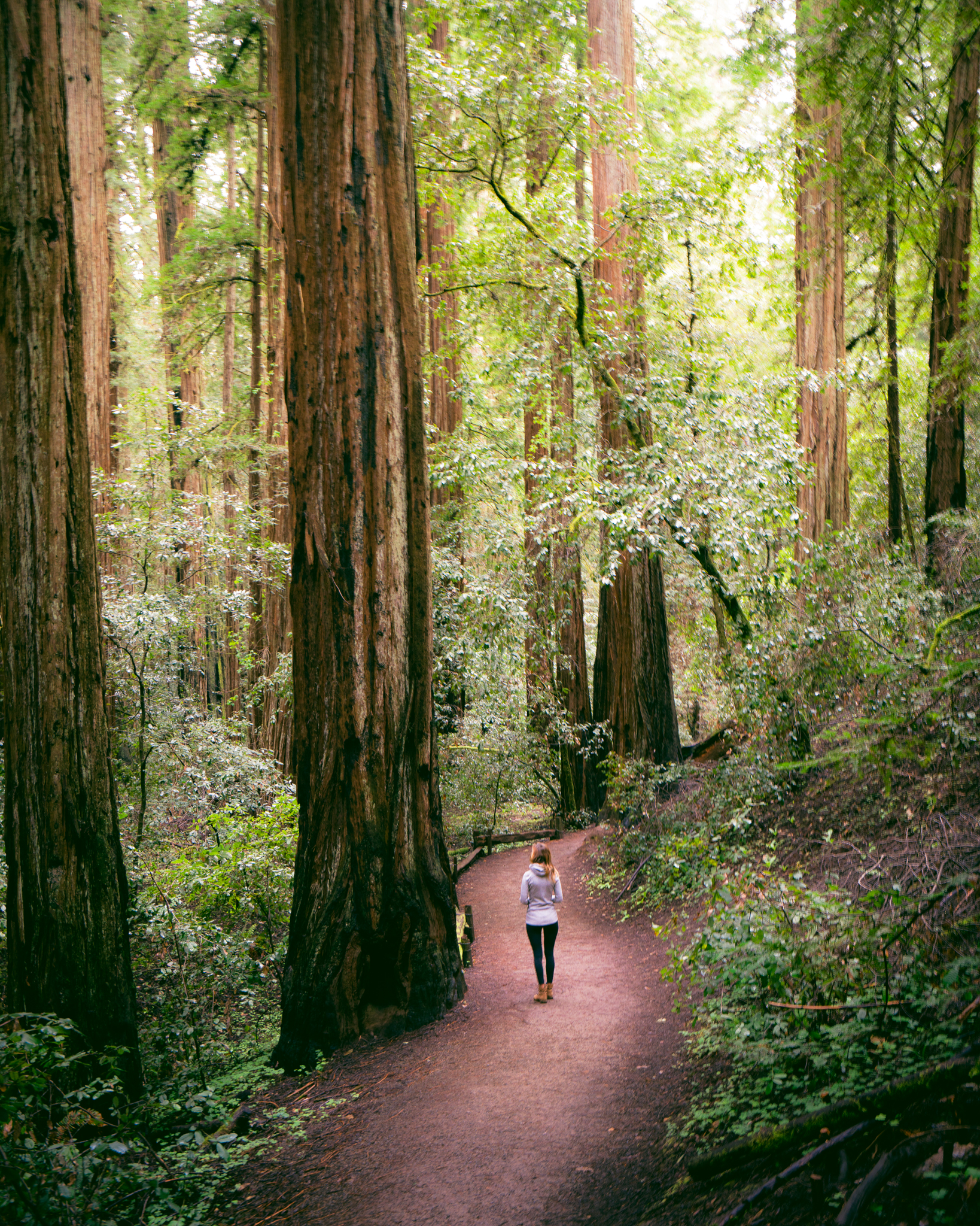 Exploring Sonoma's Coastal Redwoods at Armstrong Redwoods State Reserve.