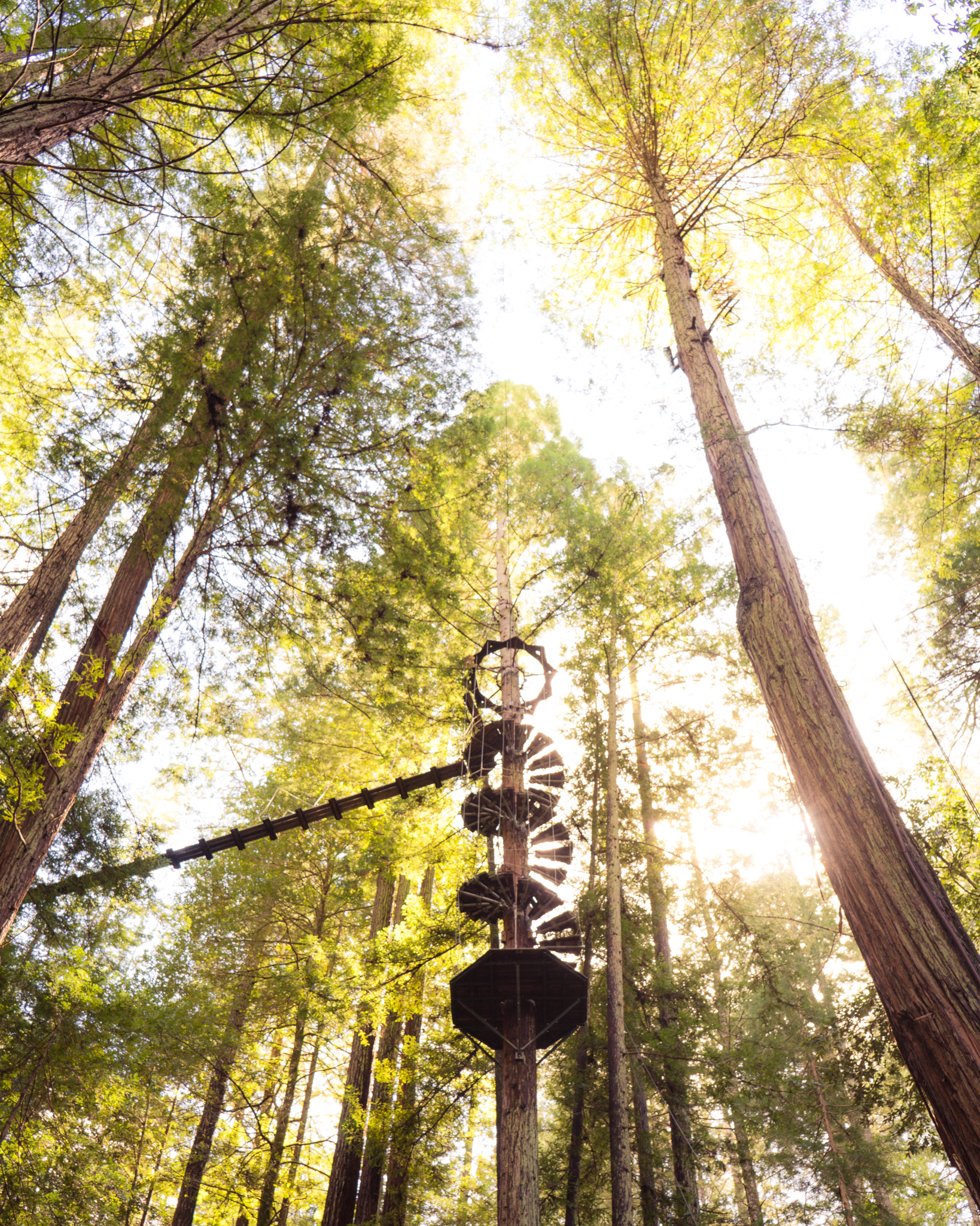 Part of the extremely fun zip line at Sonoma Canopy Tours!
