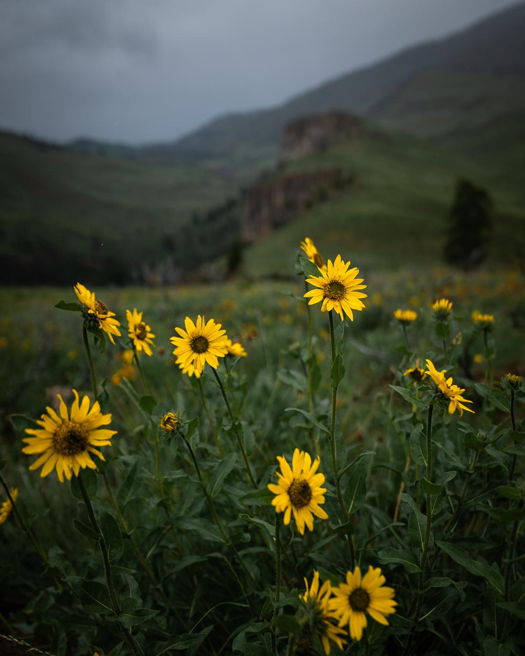Washington Spring Hikes