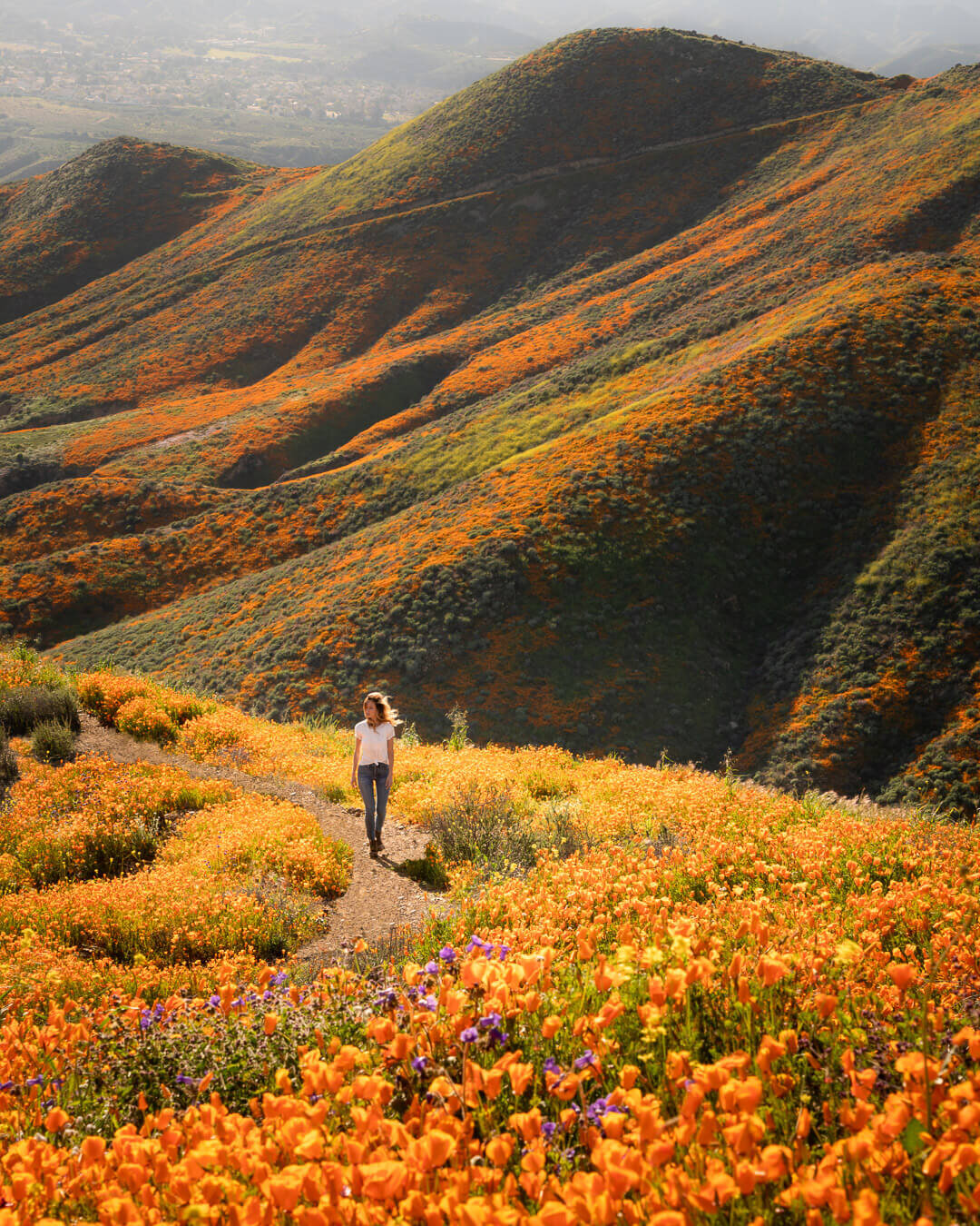 California's super bloom.