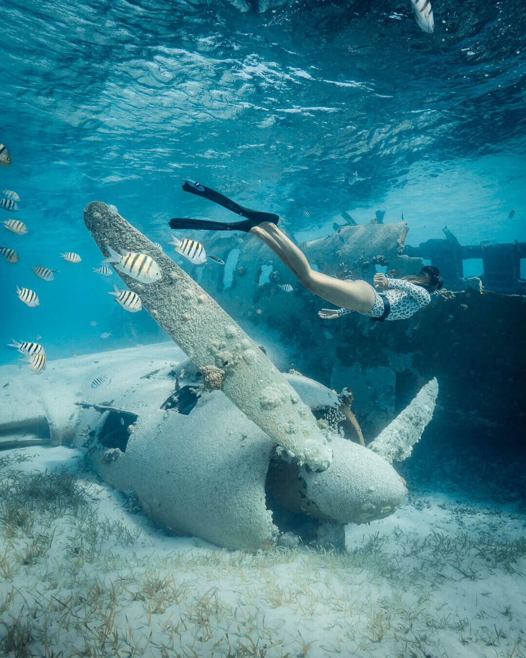 Below the waters surface at the Norman's Cay plane crash. Photo by  Quin Schrock .