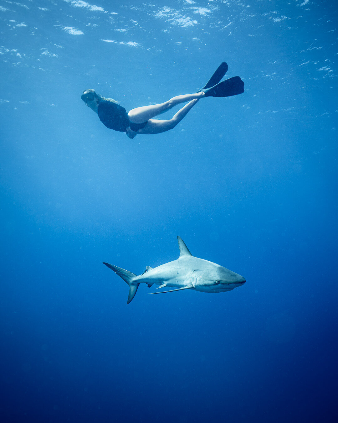 Danger Reef is a popular scuba diving location in the Exumas, known for its abundance of reef sharks. Photo by:  Matt Grondin .