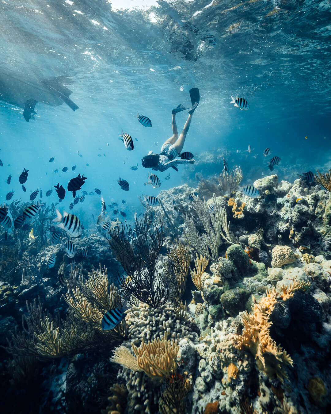 """Snorkeling at """"The Aquarium"""" off O'Brien's Cay in the Exumas.  Photo by:  Quin Schrock ."""
