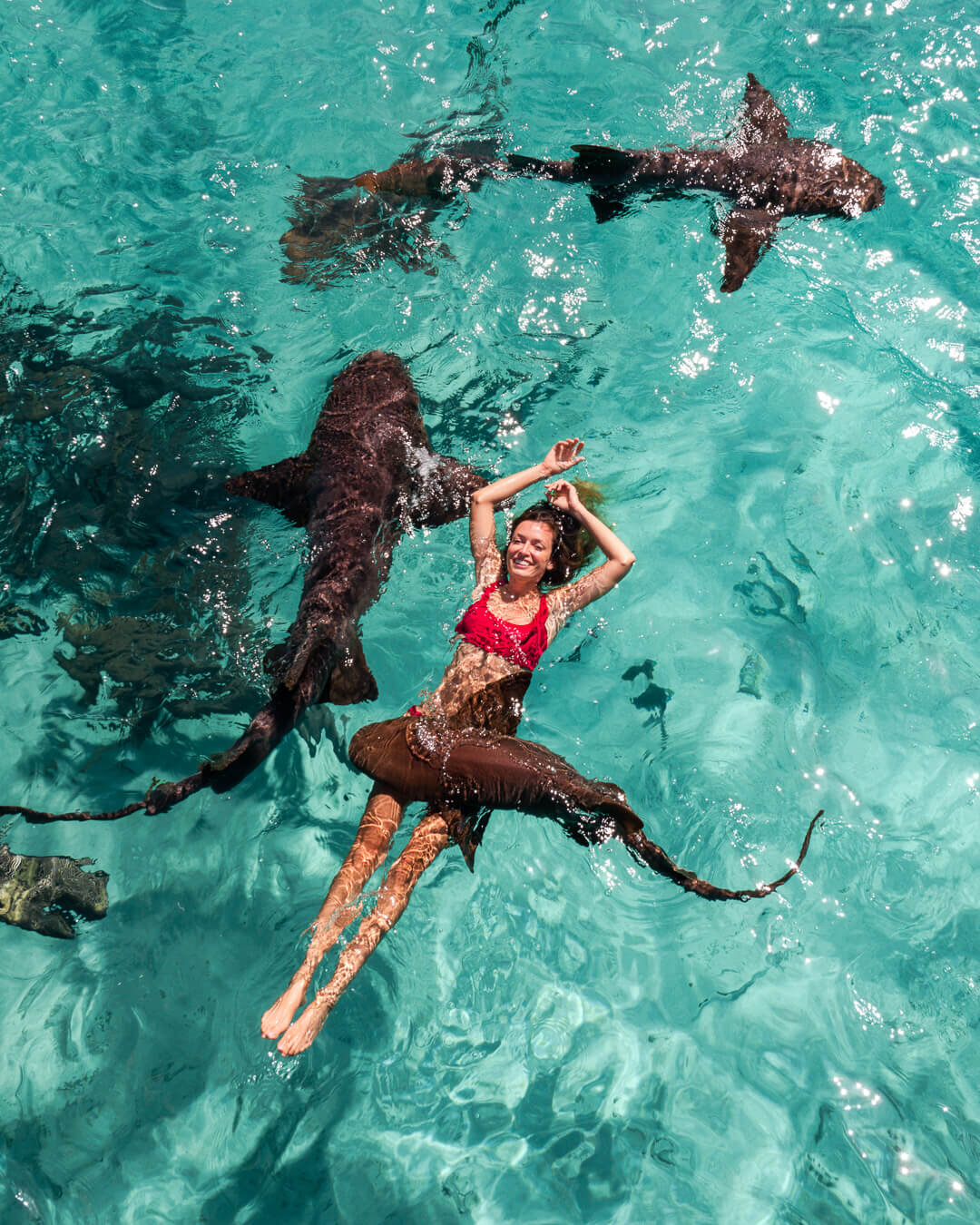 Swimming with nurse sharks at Staniel Cay. Photo by:  Quin Schrock .