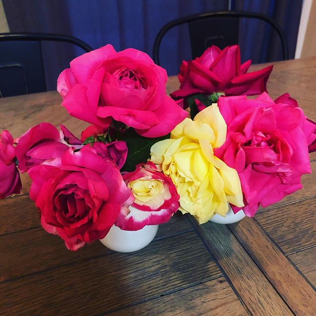 The upside to your parents having a rose garden...They have too many roses and you have to take some home. . I mean now that I think of it, is there a downside to your parents having a rose garden? 🌹