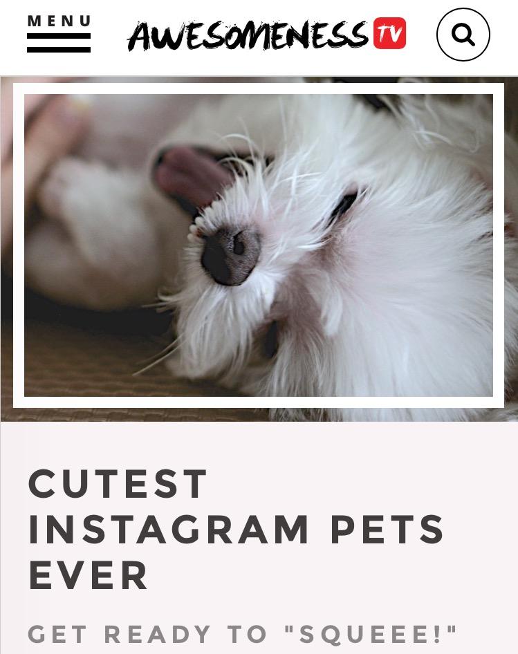 Instagram Pets