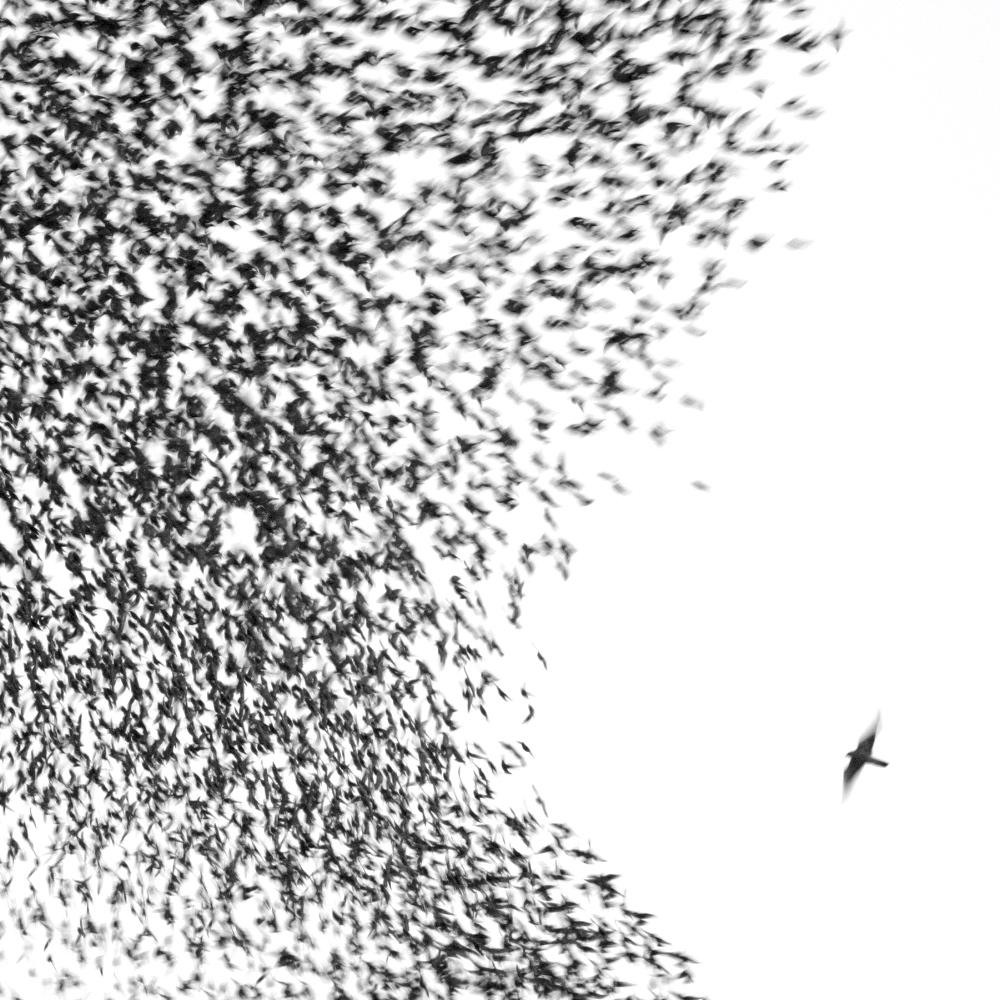 """Wilco """"Sky Blue Sky"""" 2007"""
