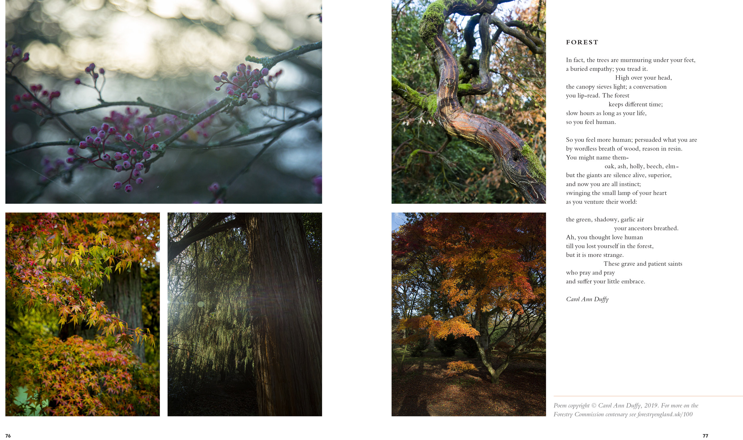BloomMag_Issue4_Trees-2.jpg
