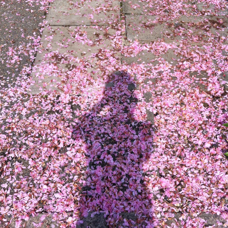 blossompavement.jpg
